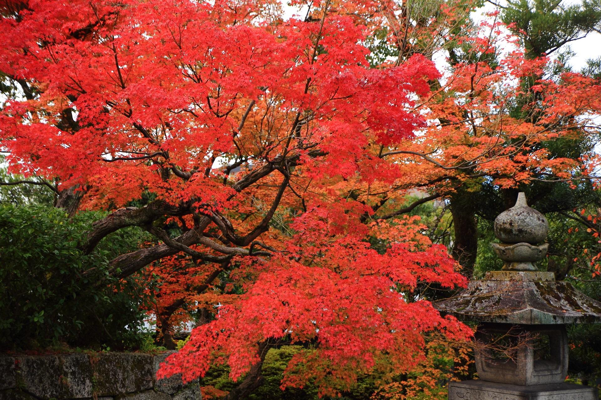 燈籠を染める絵になる赤やオレンジの紅葉