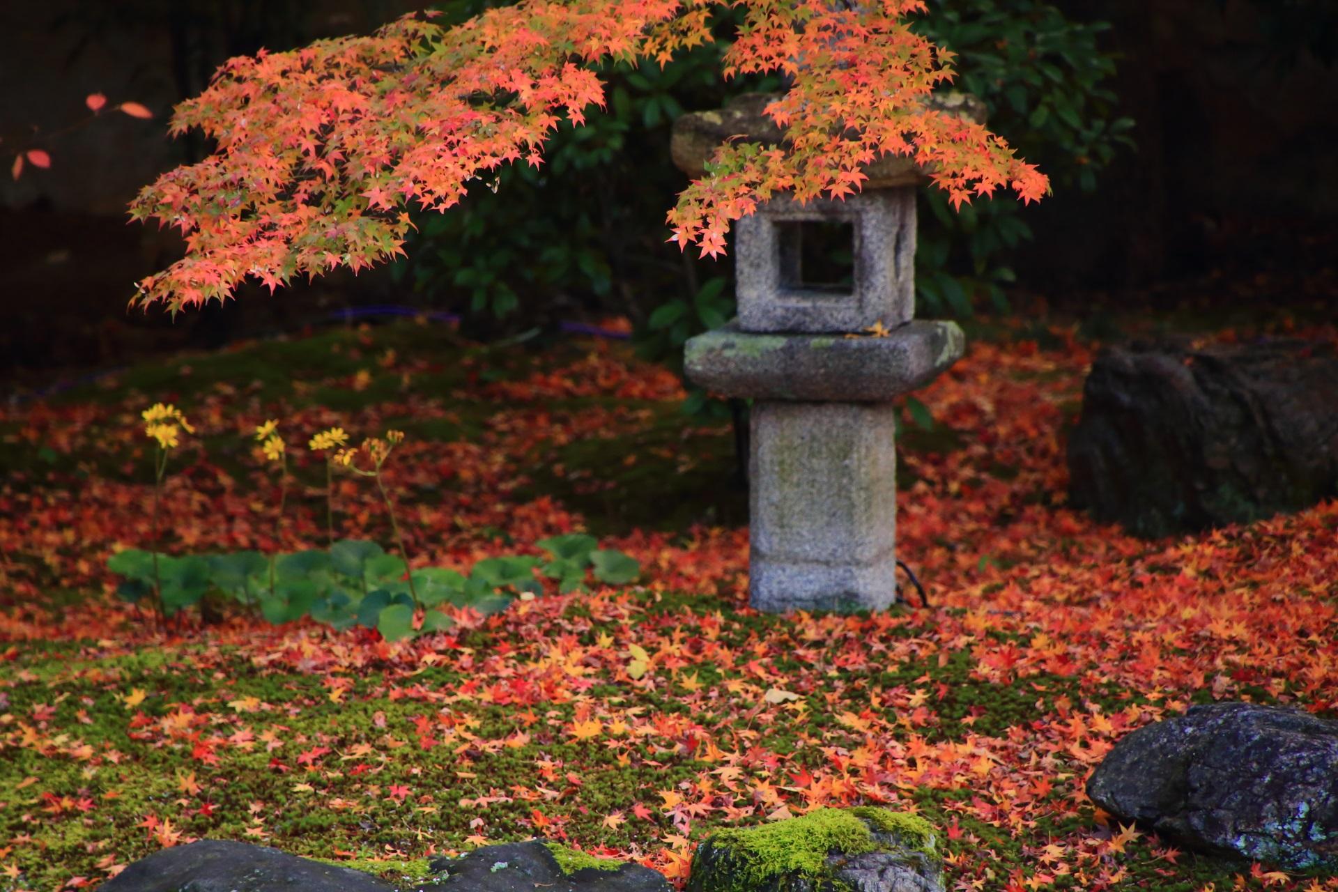 妙顕寺庭園の燈籠を染める紅葉と華やかな散り紅葉
