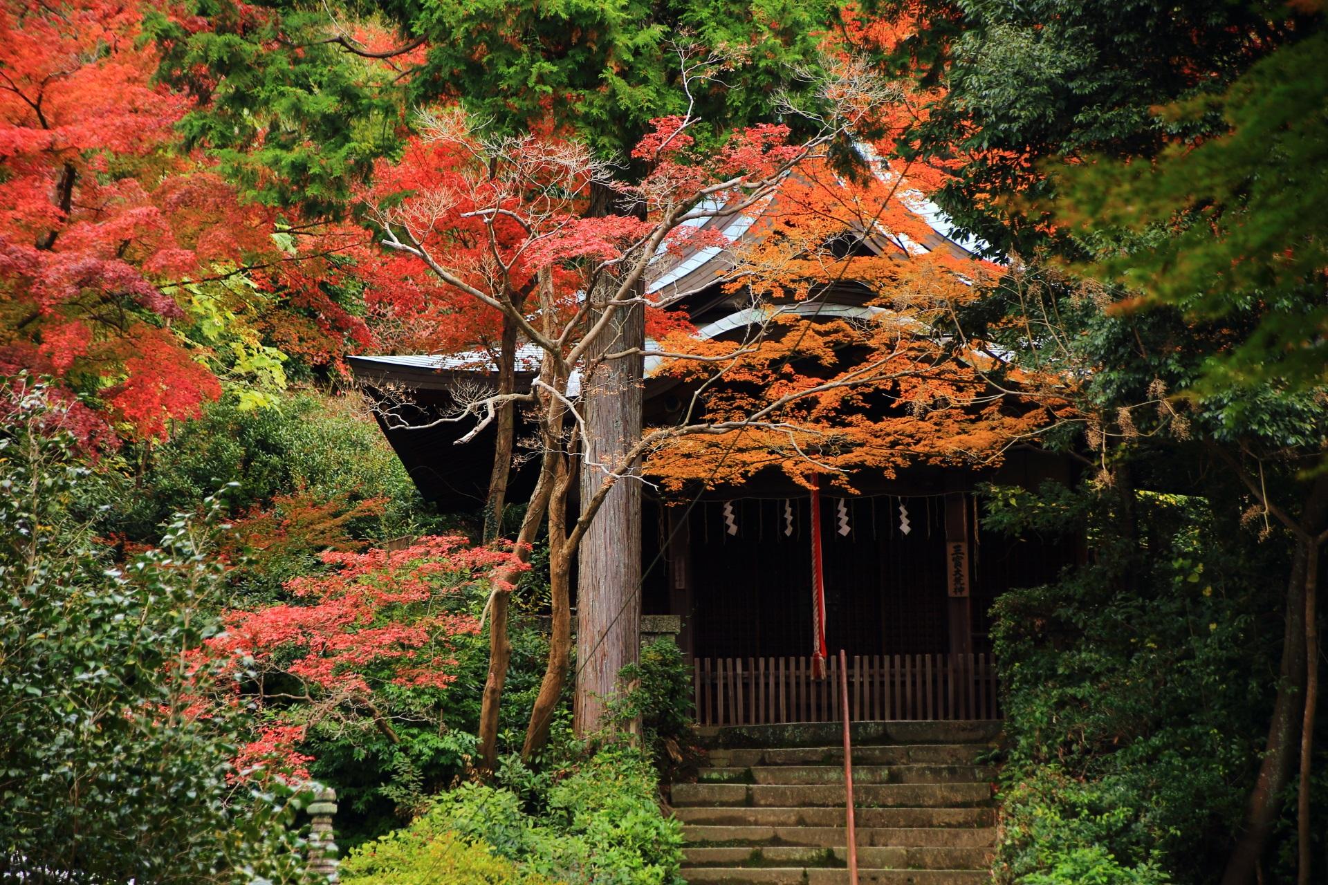 来迎院の荒神堂を染める多彩な紅葉