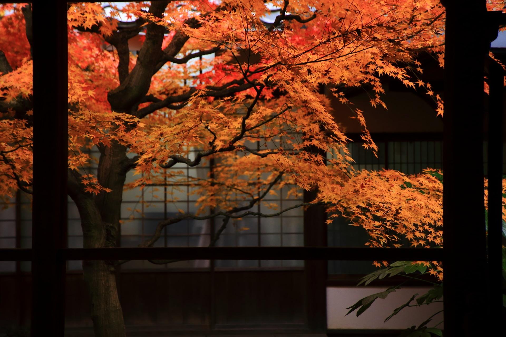 本法寺の落ち着いた庭園で浮かび上がるような鮮やかな紅葉