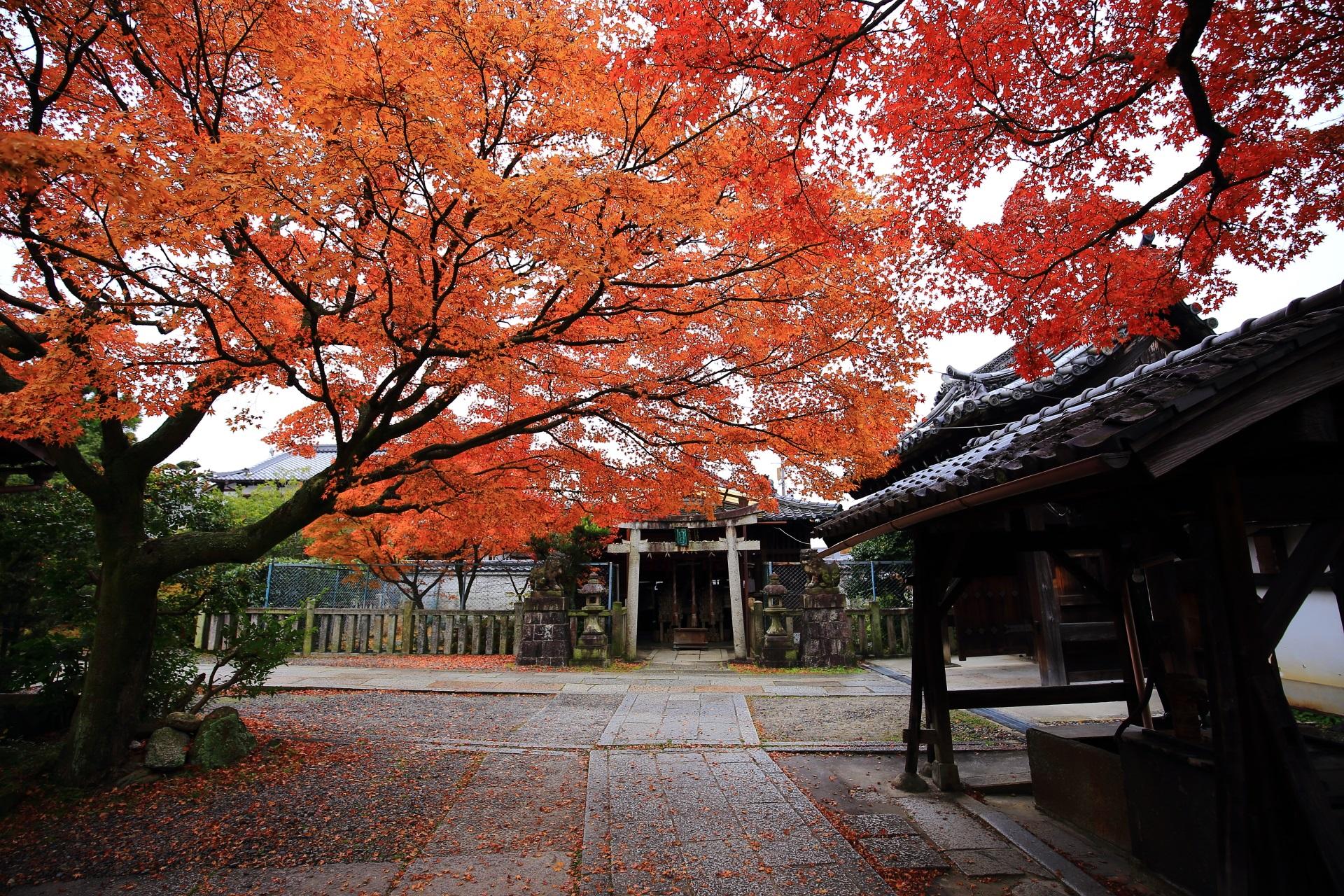 養源院の毘沙門天前の空を覆うような紅葉