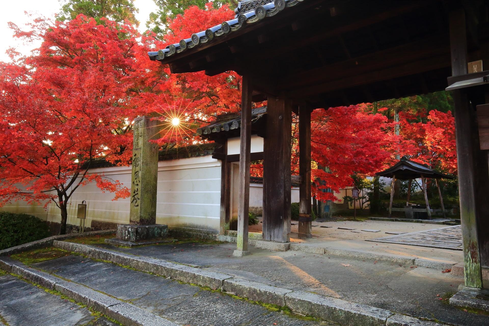 朝日が差す総門の真っ赤な紅葉