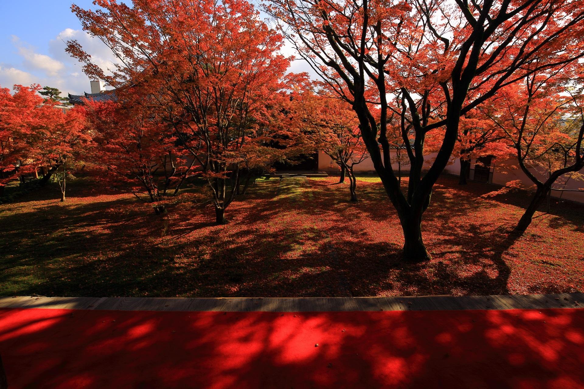 木漏れ日が美しい秋の本堂前庭園
