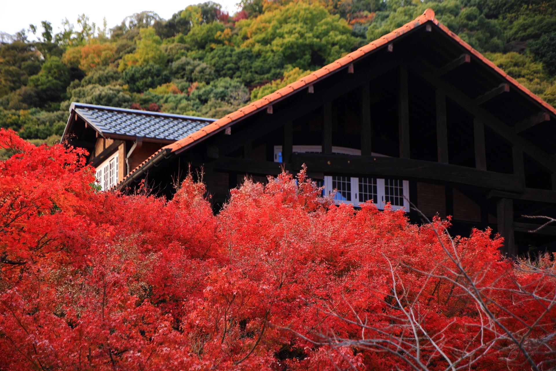 鮮やかな秋色につつまれる芸術的な近代建築の建物