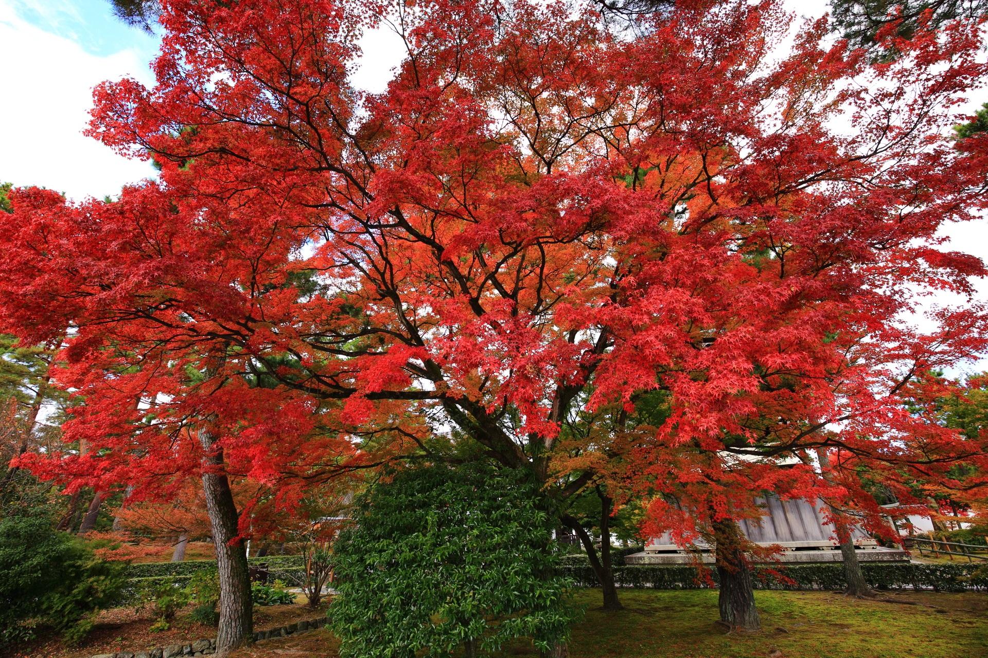 鐘楼と空を彩る圧巻の紅葉