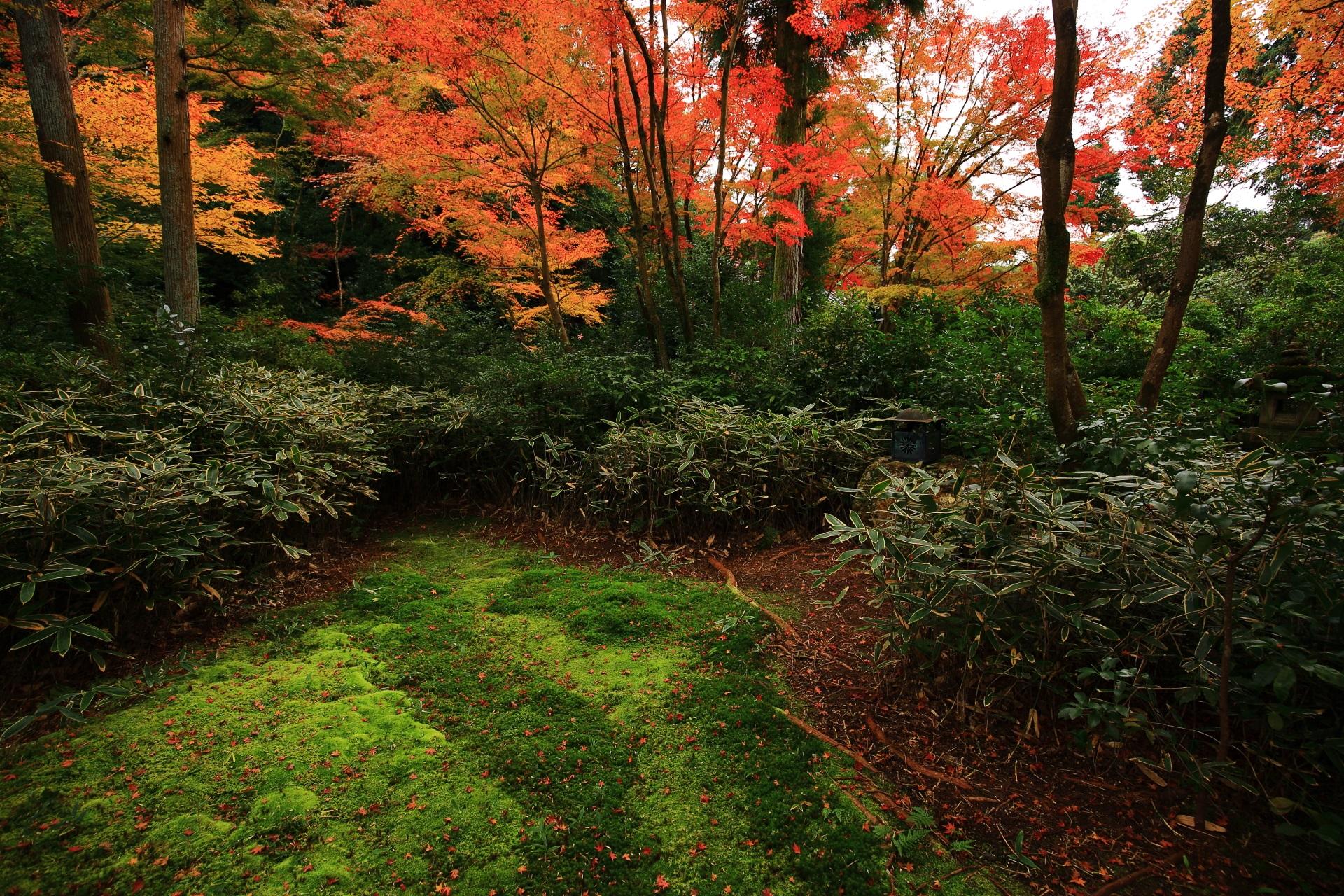 心和む秋色につつまれる紅葉の穴場の来迎院の含翆庭