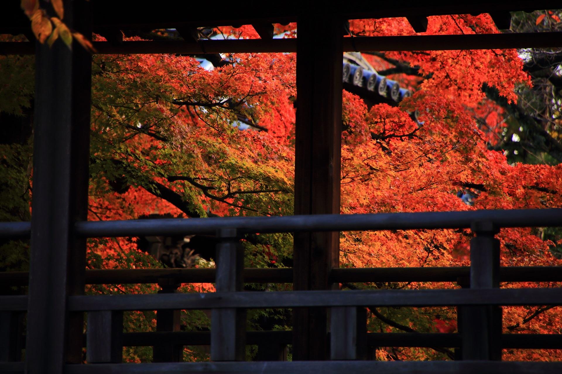 妙顕寺の本堂裏の回廊と煌く鮮やかな紅葉