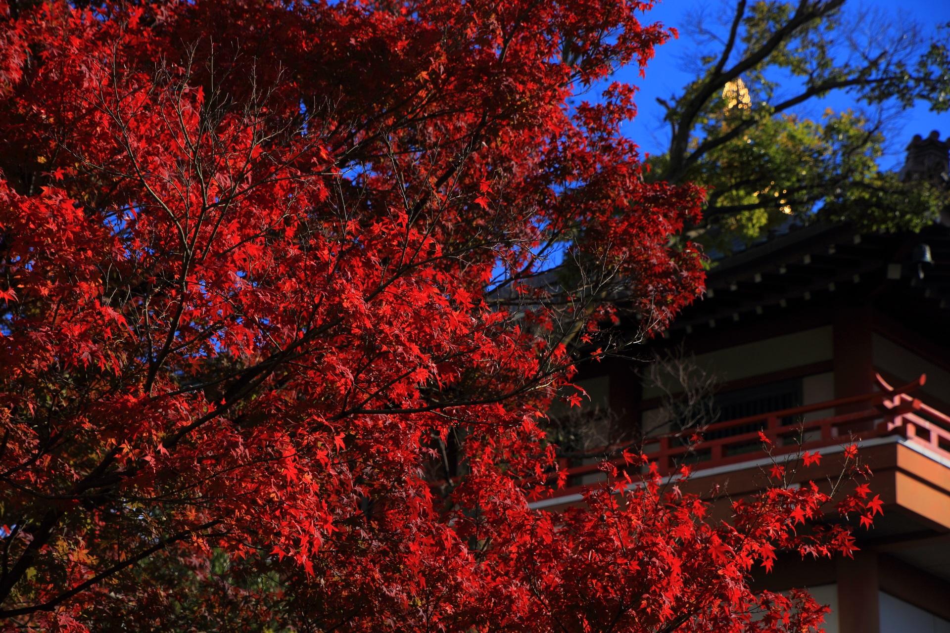 本法寺の溢れる煌く真っ赤な紅葉