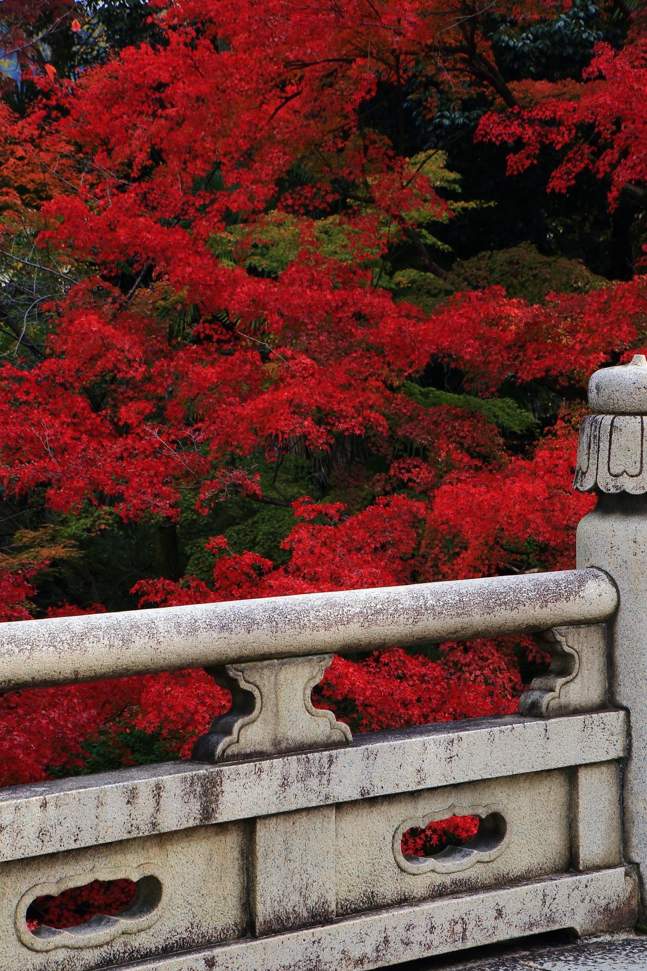大谷本廟の静かな石橋の向こうの燃え上がるような真っ赤な紅葉