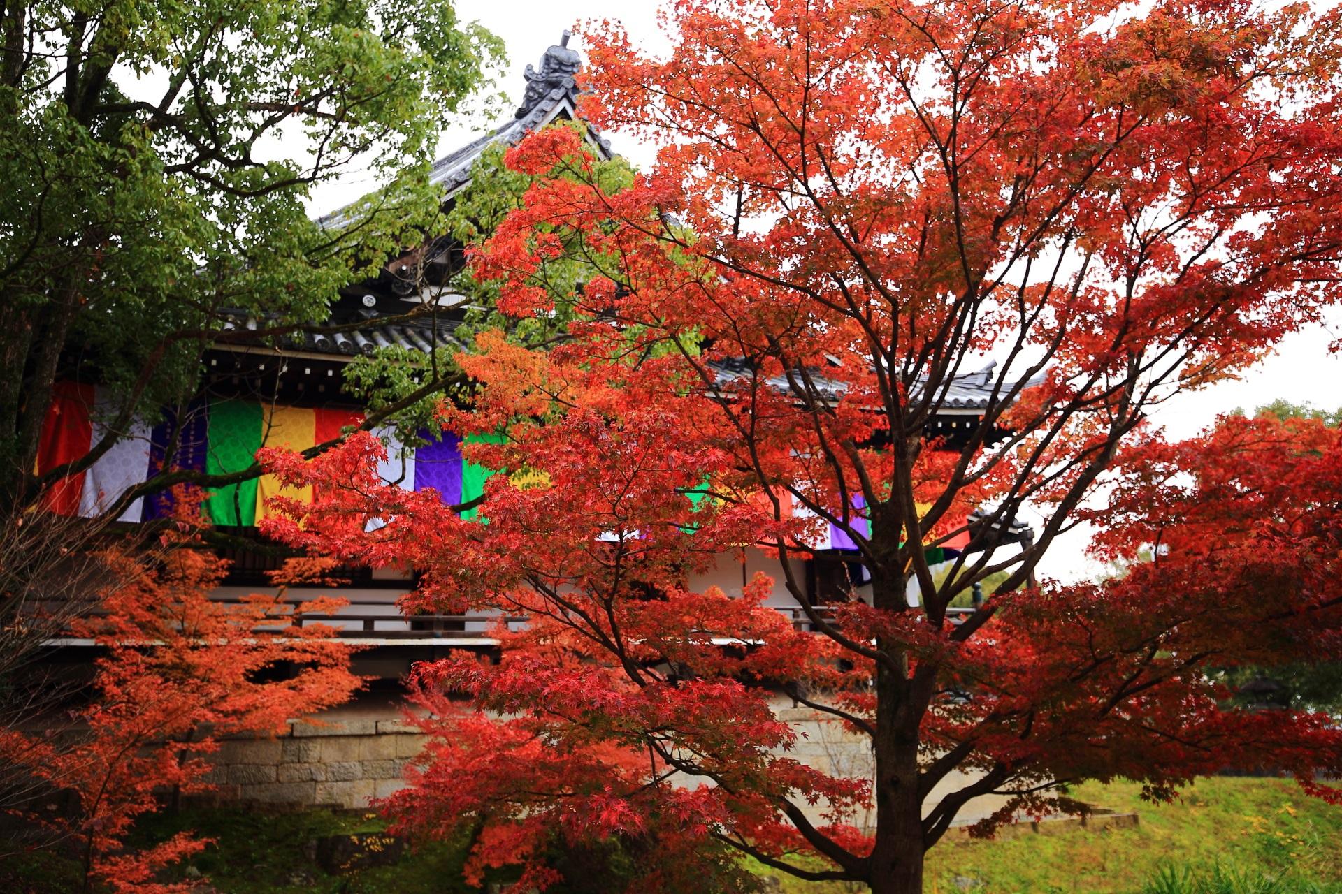 明王殿を彩る鮮やかな赤い紅葉