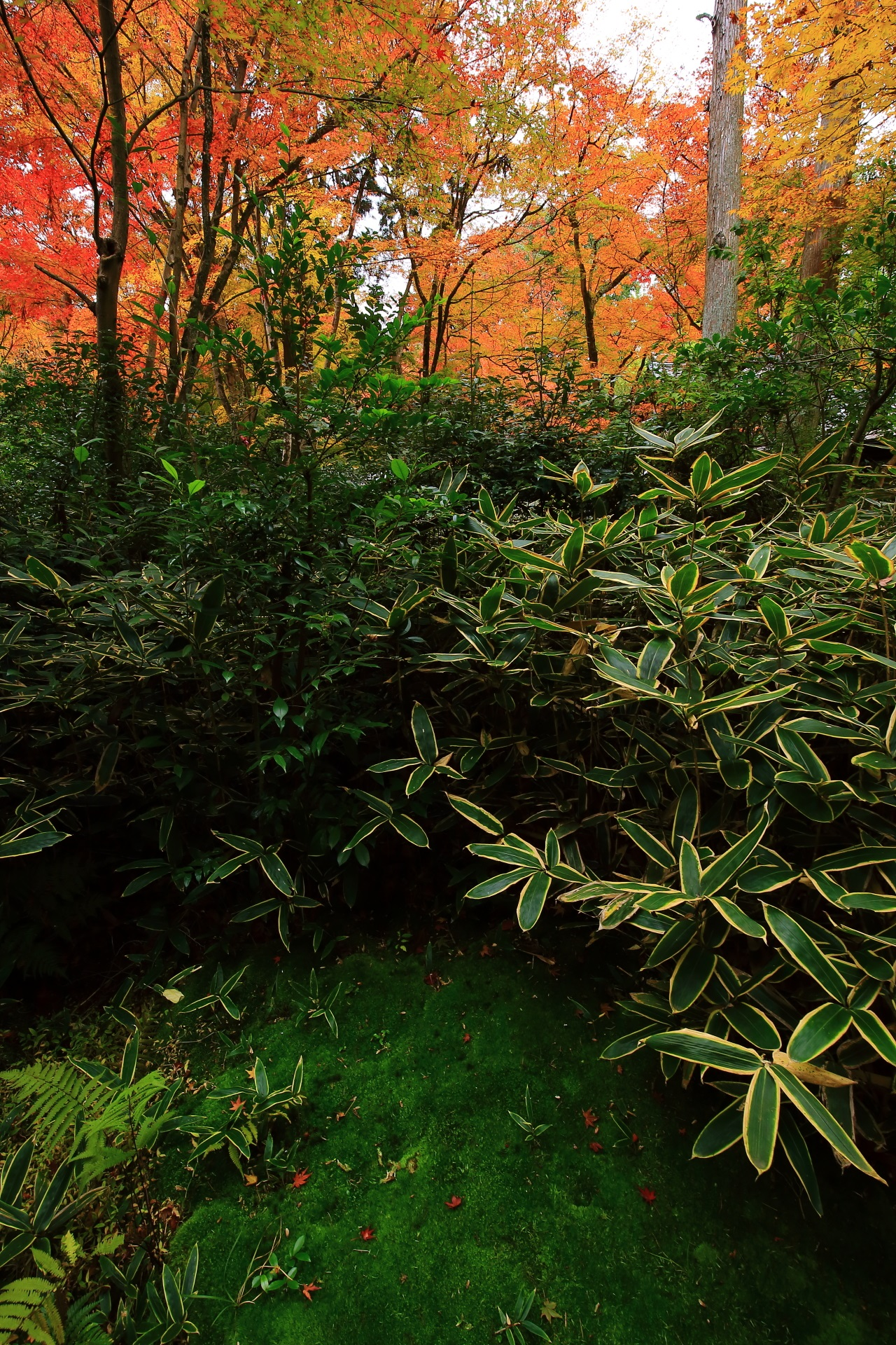 含翠庭の緑の苔や笹とオレンジの紅葉との綺麗なコントラスト