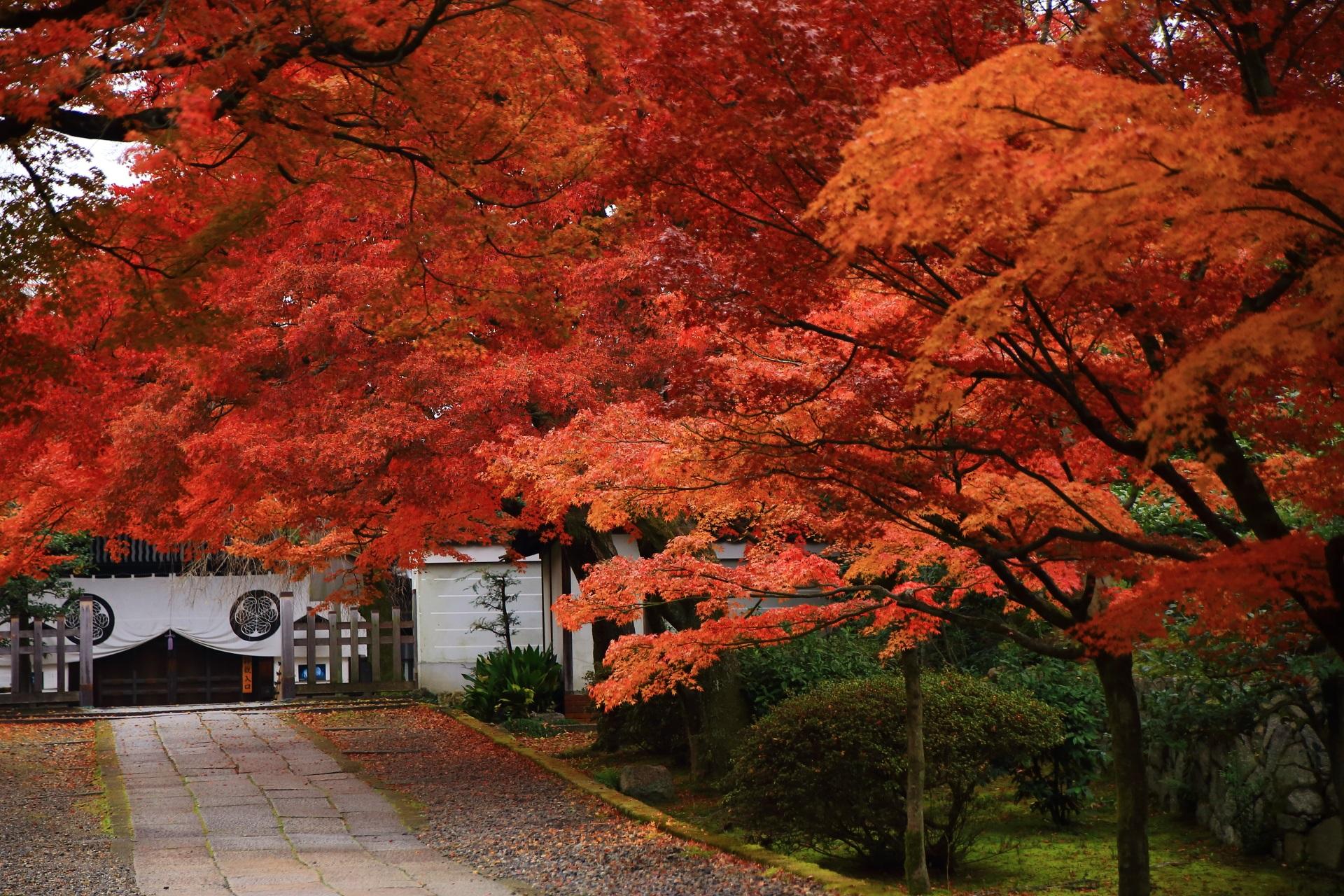 燃えたぎるように参道や境内を覆う絶品の紅葉