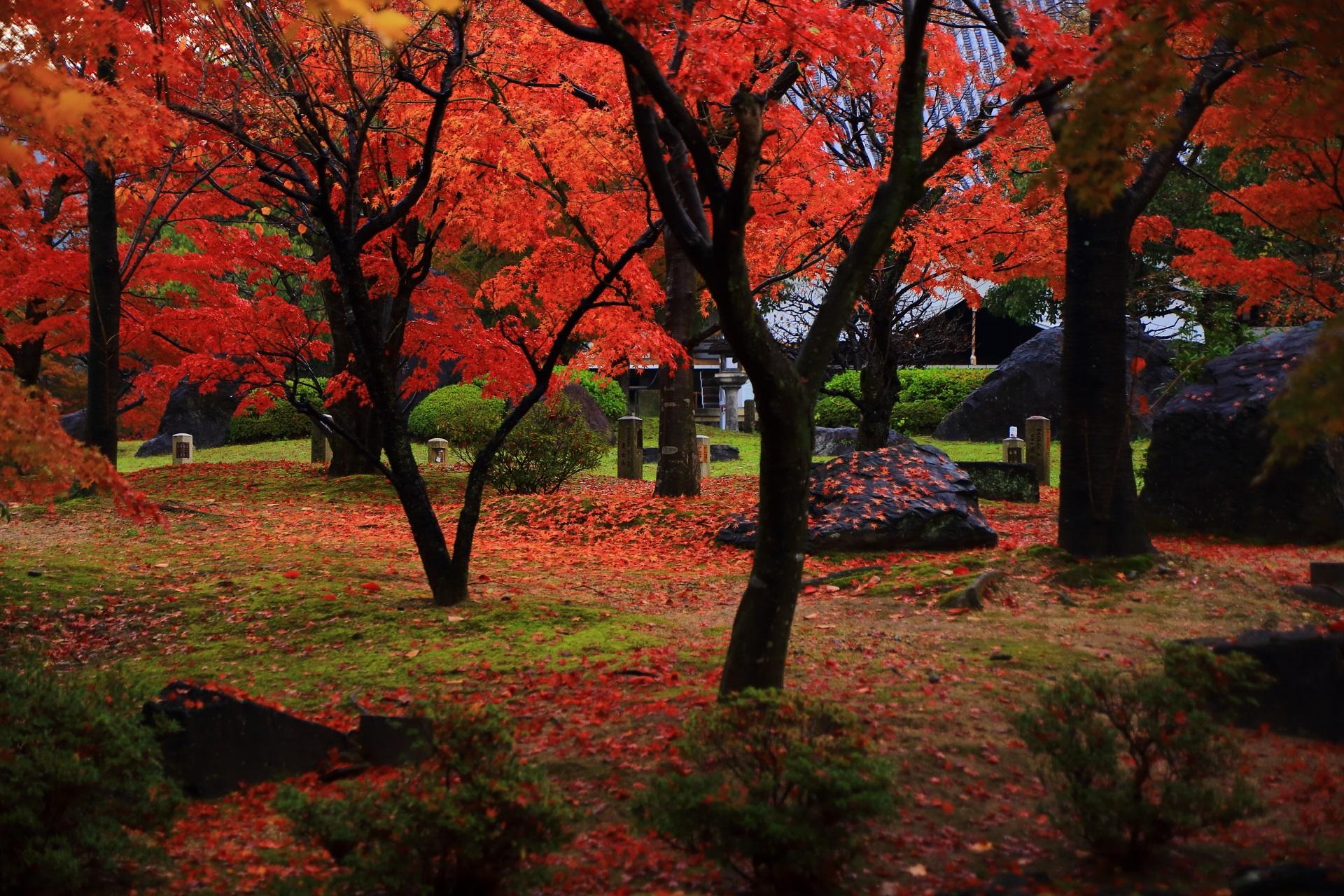 智積院の明王殿と鐘楼の間の紅葉や散りもみじ