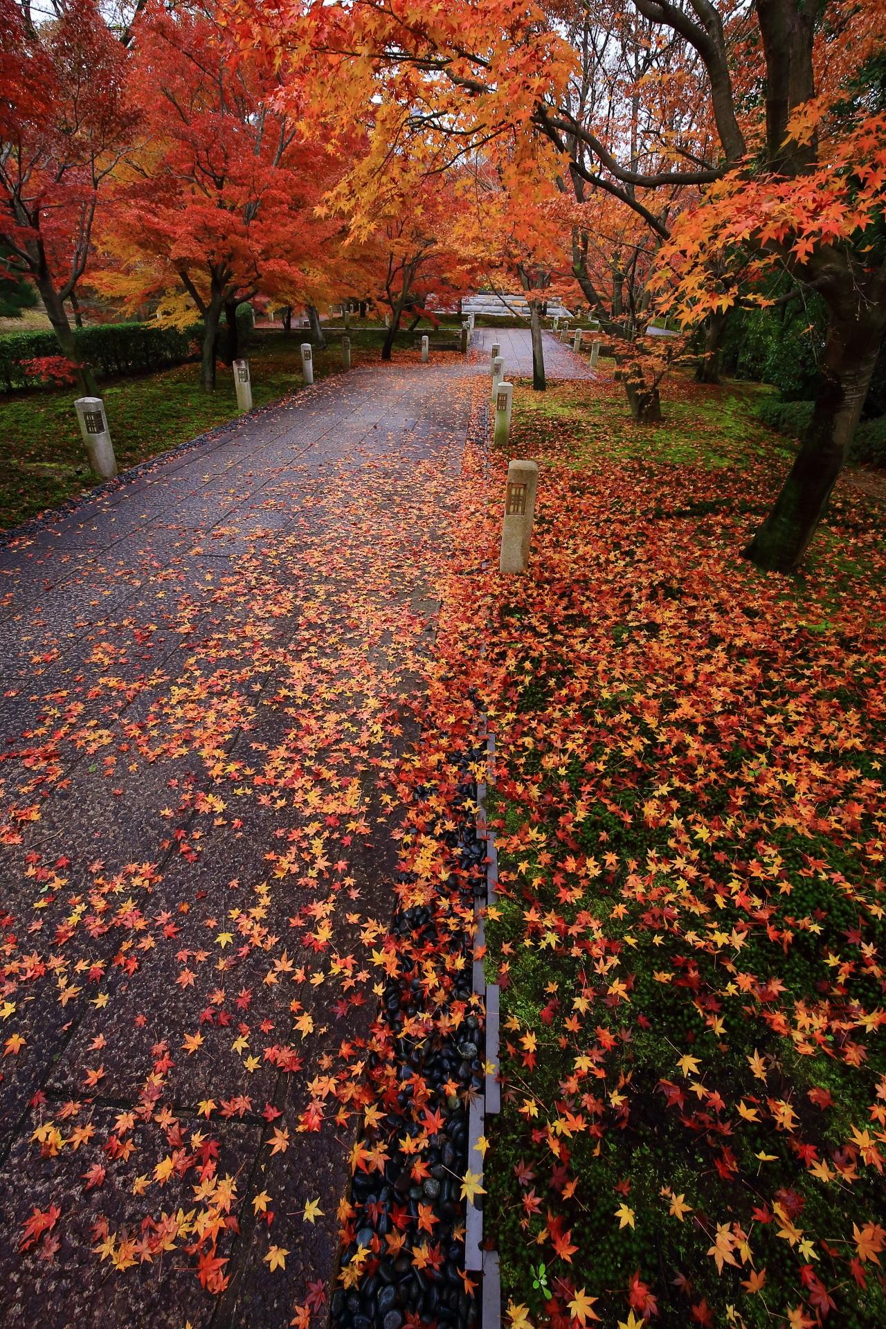 智積院の見事な散りもみじが演出する美しすぎる秋色の空間