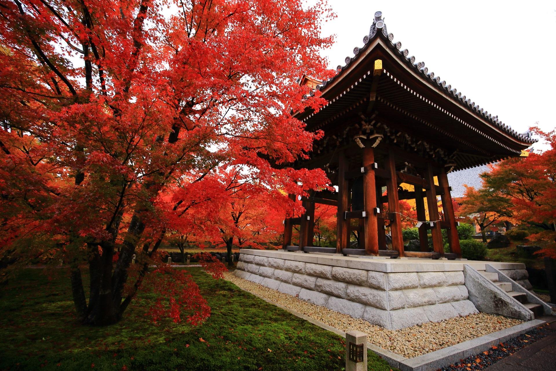 赤い紅葉に彩られる鐘楼と智積院の早朝の境内