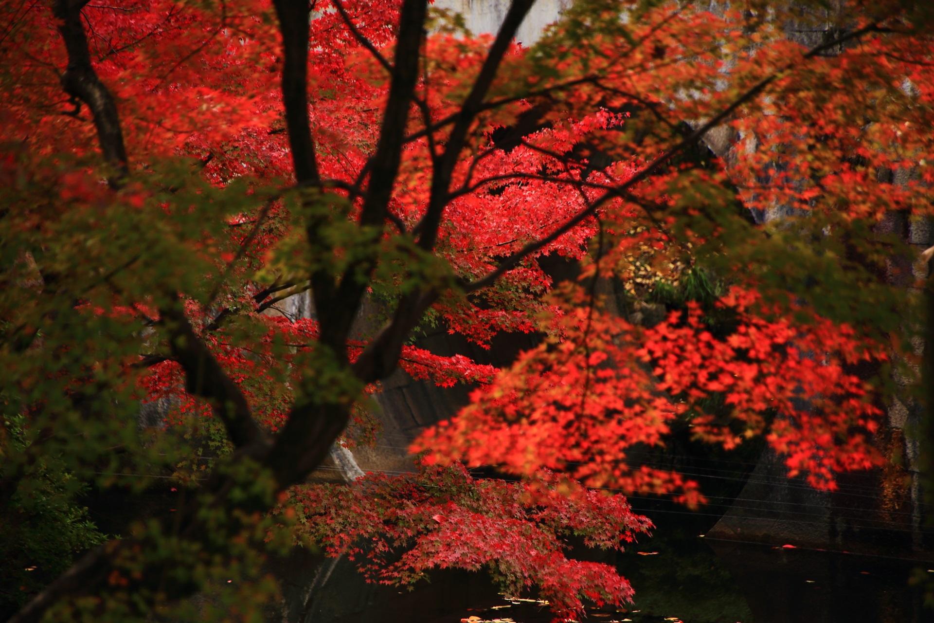 大谷本廟のめがね橋と紅葉