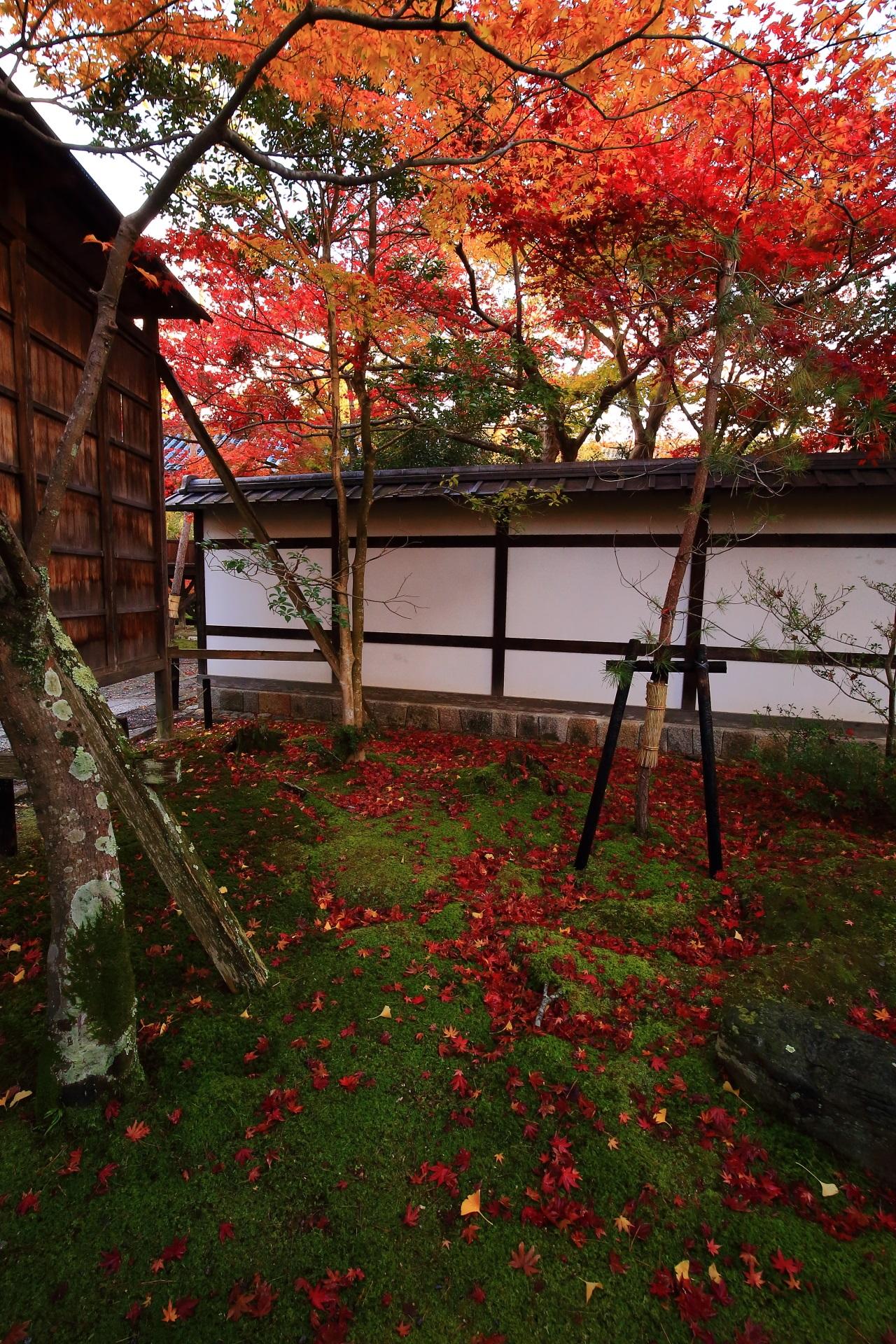 上も下も素晴らしい秋の彩りにつつまれた清涼寺