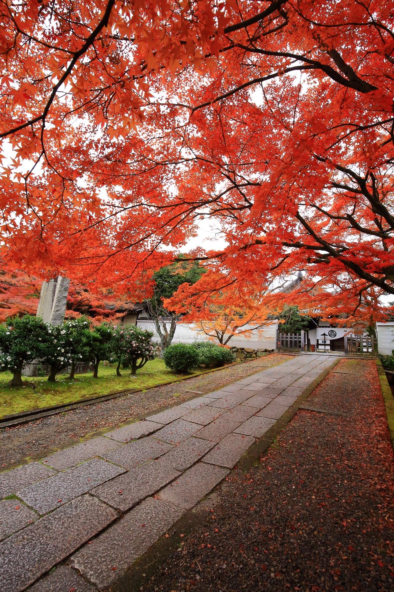 玄関と左奥に佇む本堂を彩る圧巻の紅葉