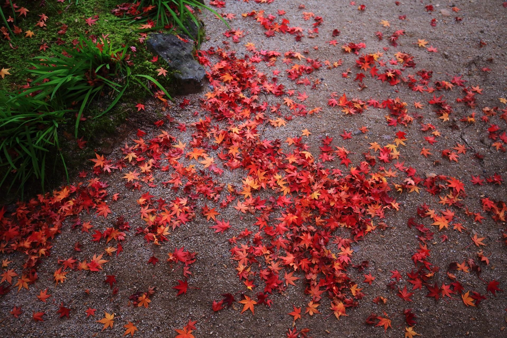 一休寺の美しい散り紅葉