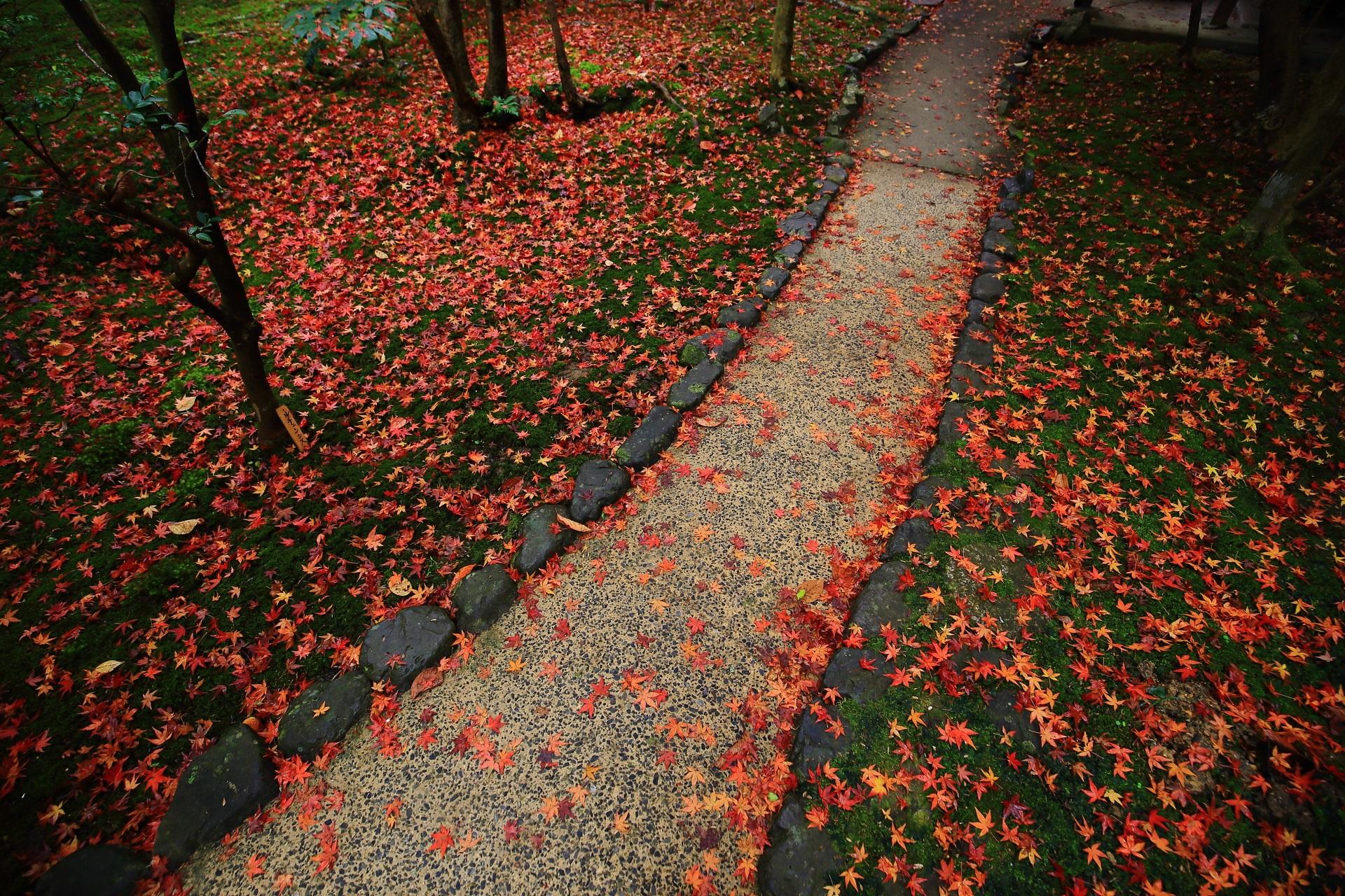 霊鑑寺の華やかで煌びやかな極上の散り紅葉