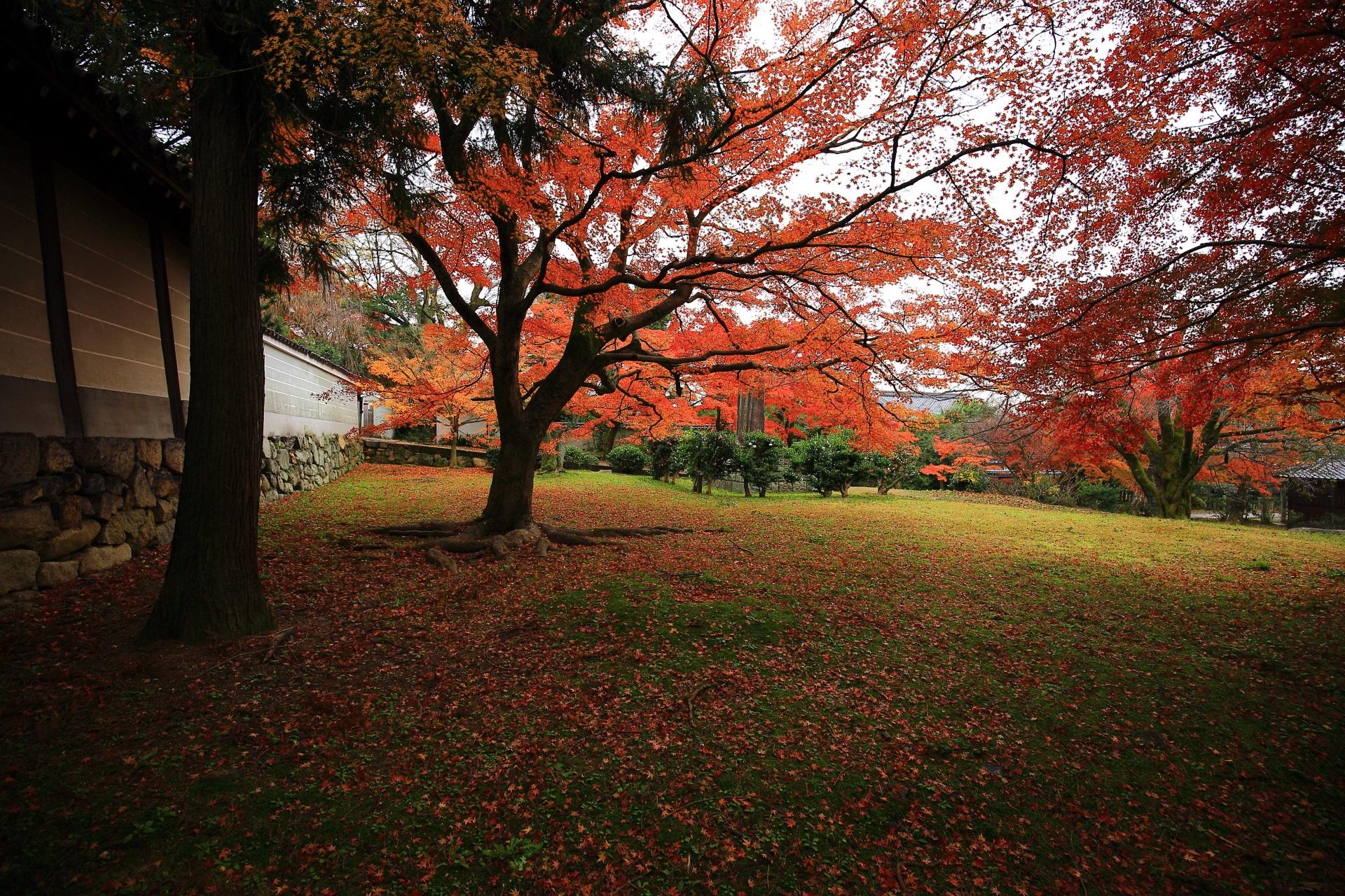 勅使門前の紅葉と散りもみじの秋色の空間