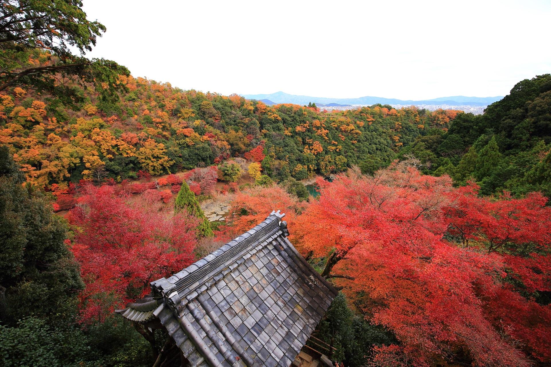 大悲閣から眺めた眼下に広がる秋色の絶景