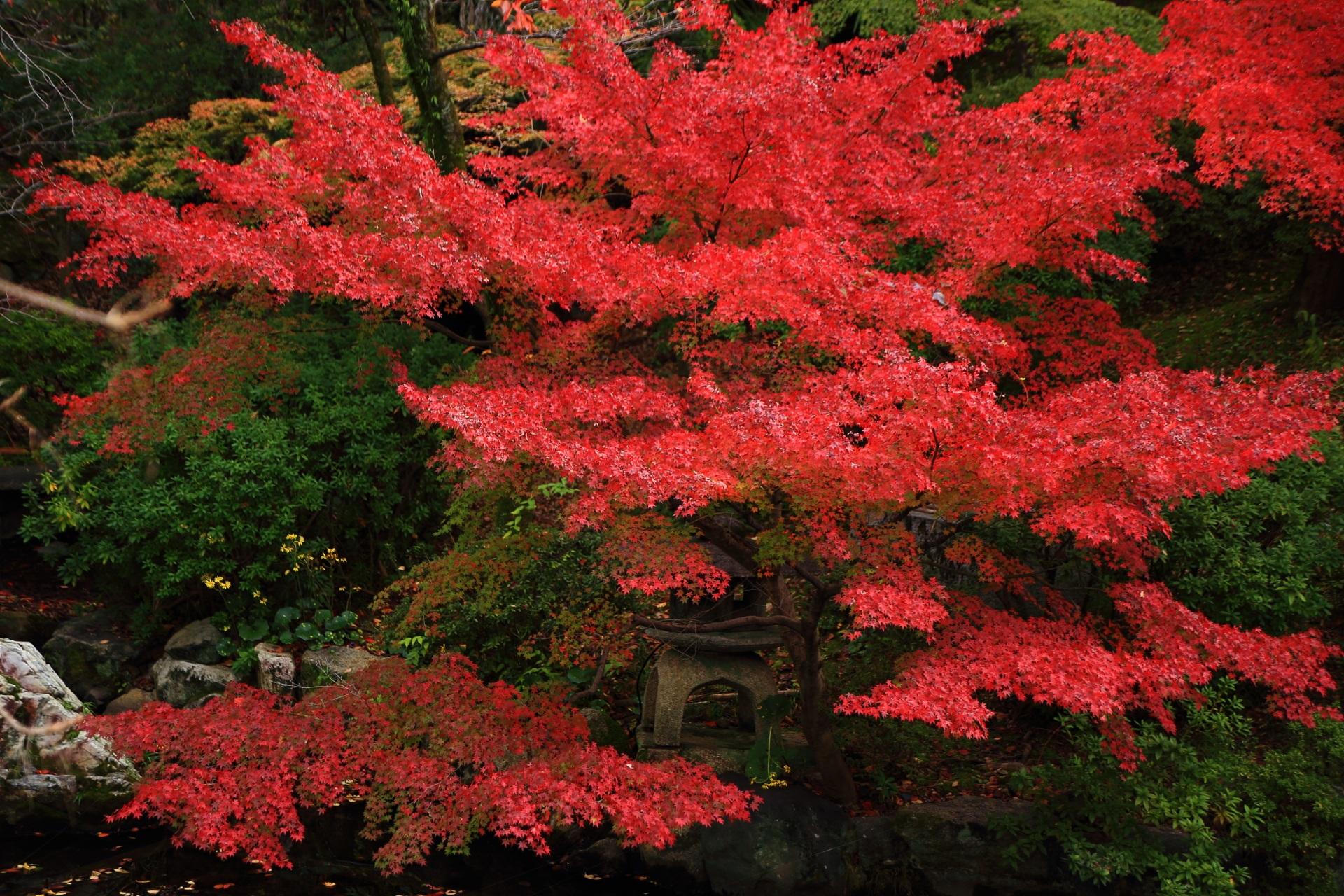 大谷本廟の皓月池畔の燈籠を彩る真っ赤な紅葉