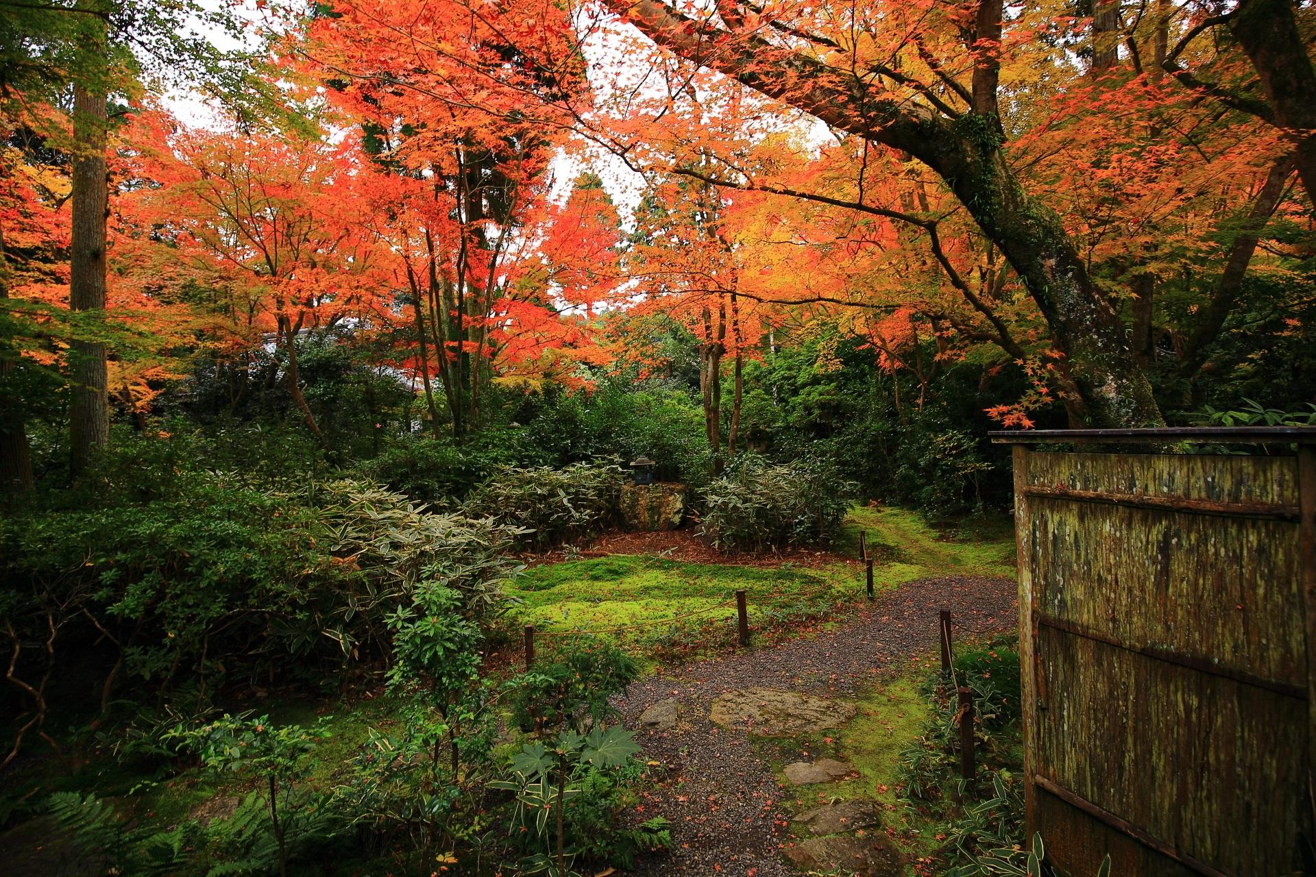高画質 写真 含翆庭 紅葉 来迎院