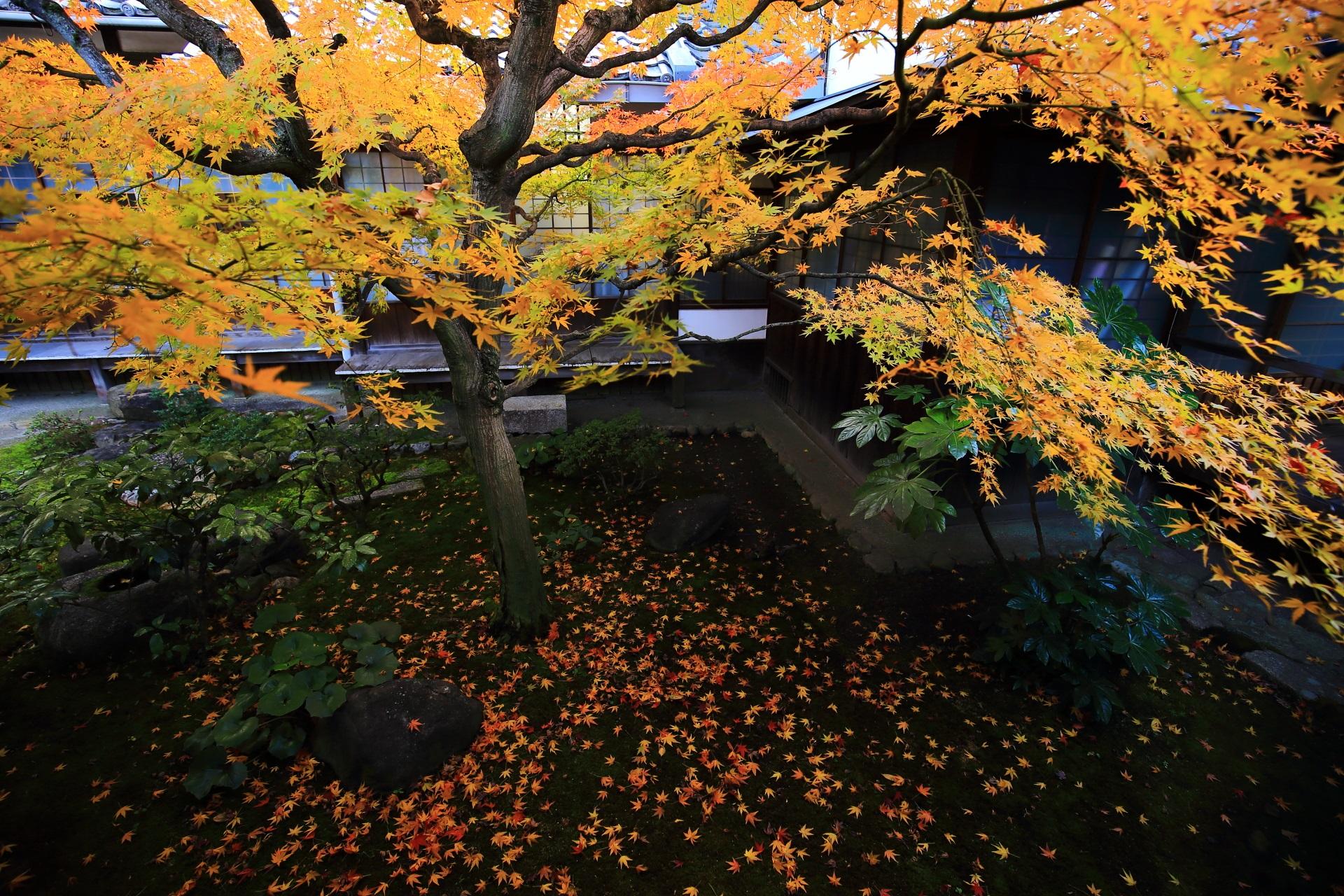 本法寺の巴の庭の入り口付近の回廊の庭園の紅葉