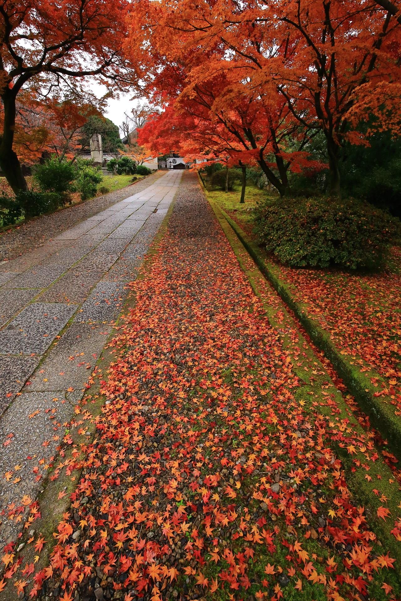たくさんの星が散りばめられたような散り紅葉