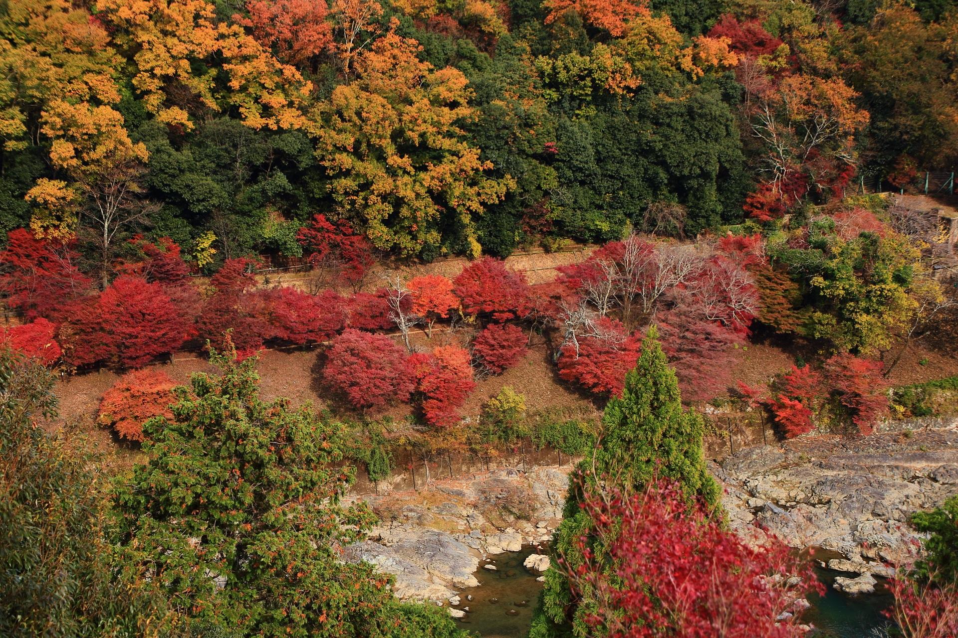 大悲閣千光寺から眺める嵐山の水辺を彩るたくさんの炎のような紅葉