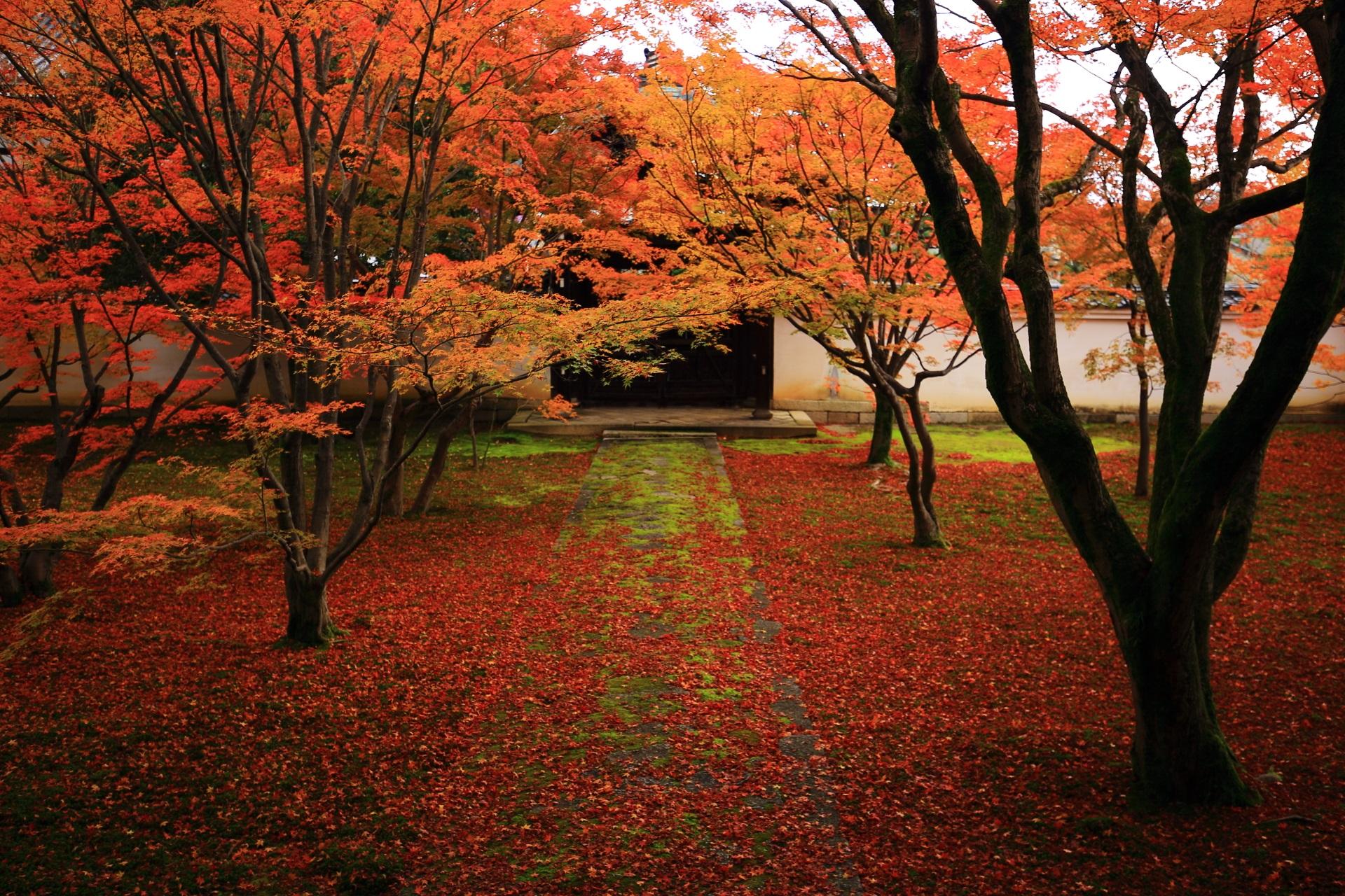 妙覚寺の唐門を秋色に染める紅葉と散りもみじ