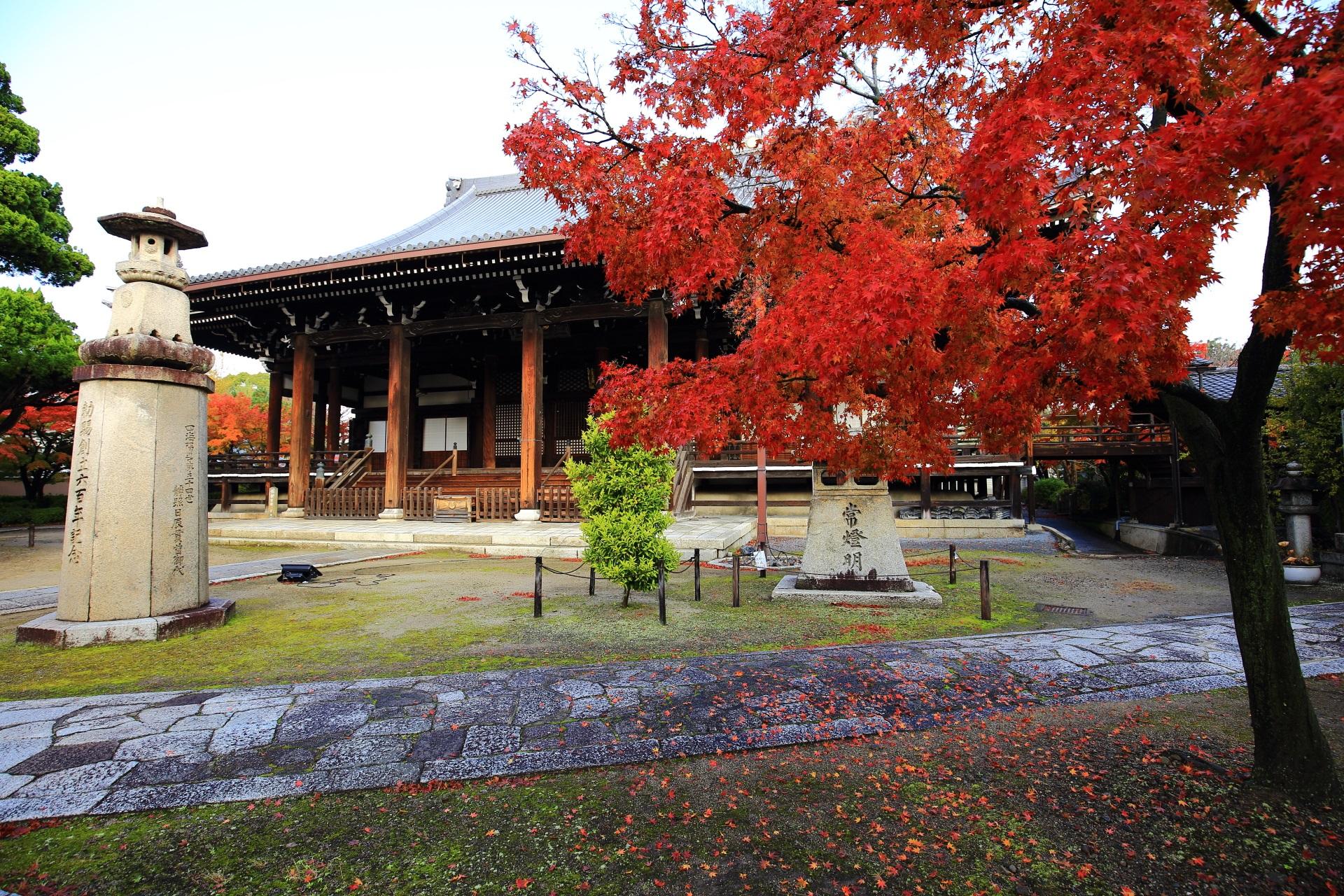 妙顕寺の本堂を彩る真っ赤な紅葉
