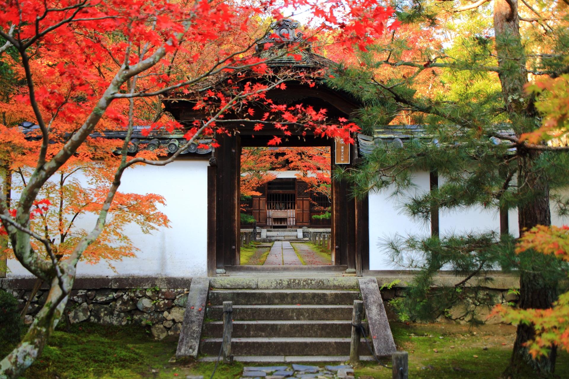 中門と本堂と鮮やかな紅葉