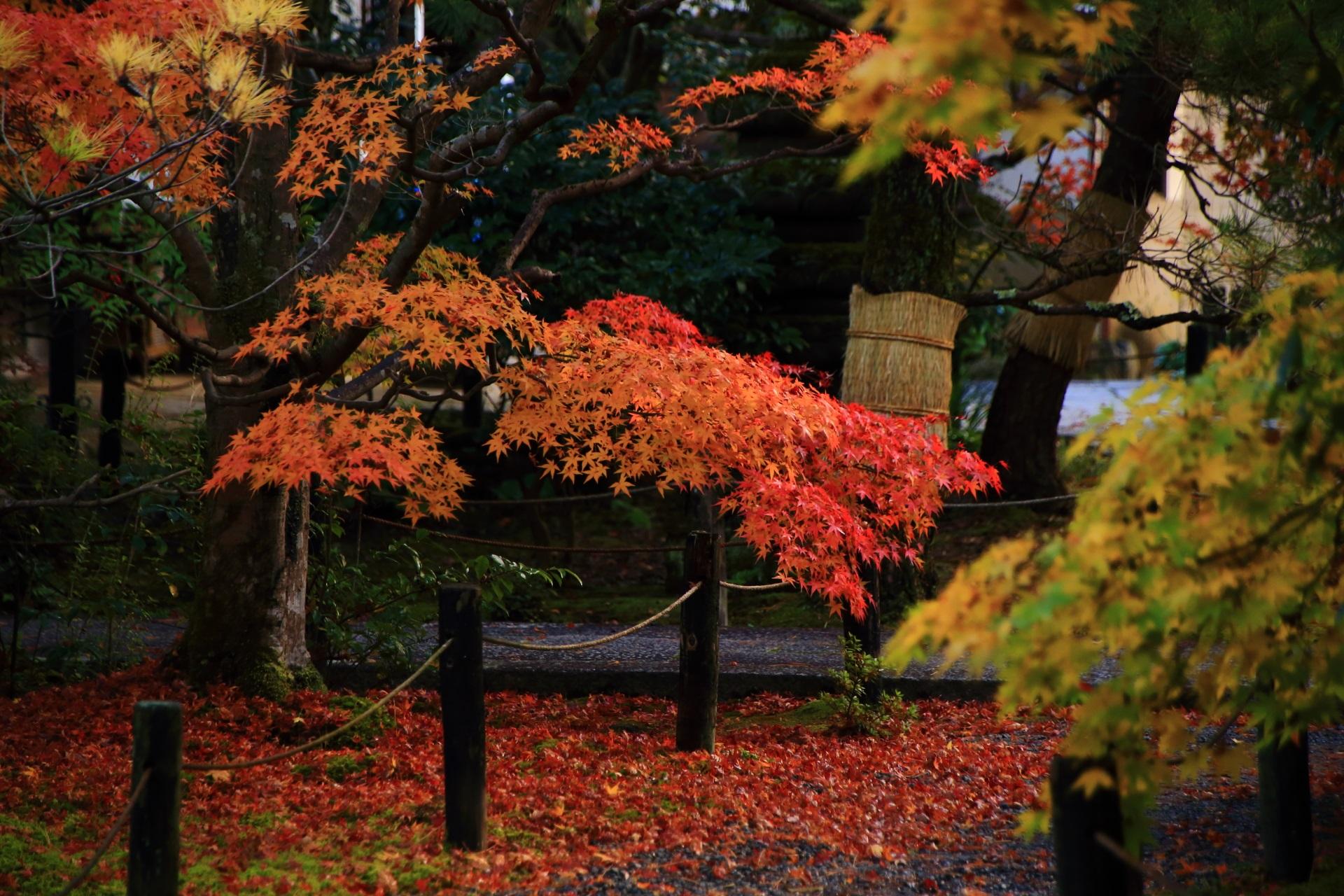 風情ある秋のひとコマと趣きある散紅葉