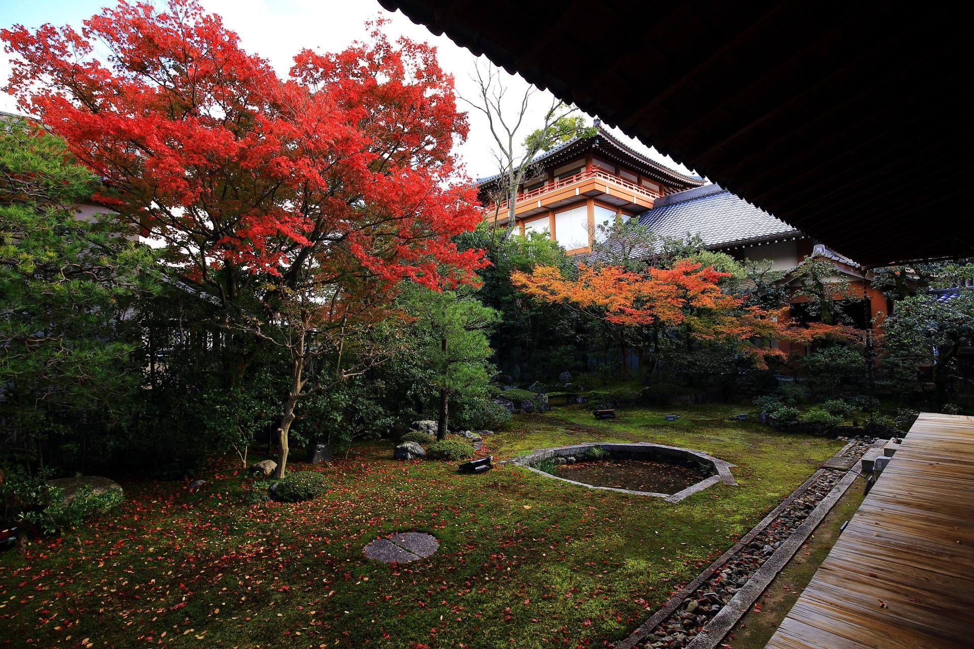 秋色につつまれた本法寺の静かな巴の庭
