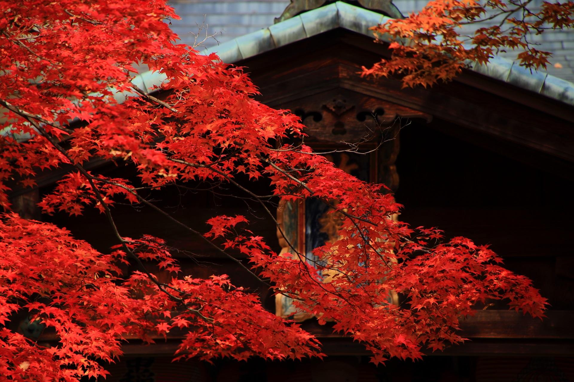 竹中稲荷神社の本殿を秋色に染める艶やかな紅葉
