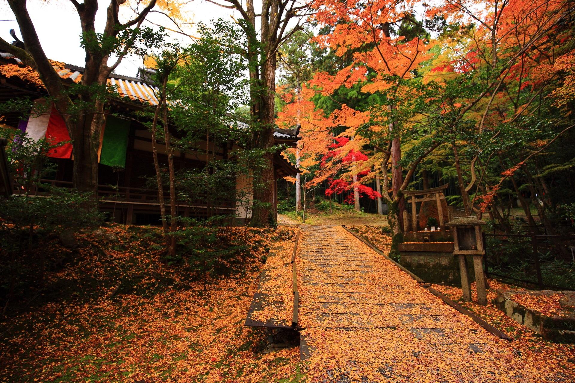 大師堂横の散り銀杏と趣きある秋の彩り