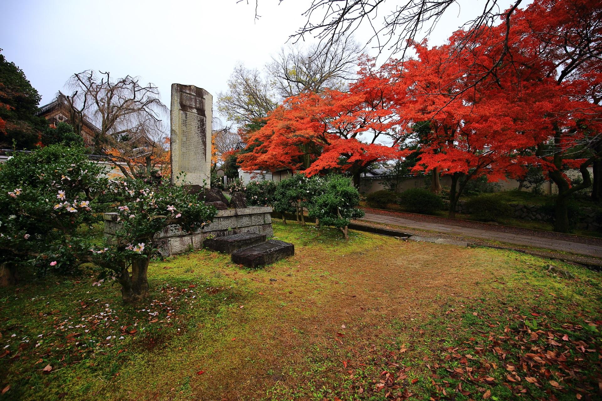 圧倒的な紅葉と庭園を彩る山茶花の花