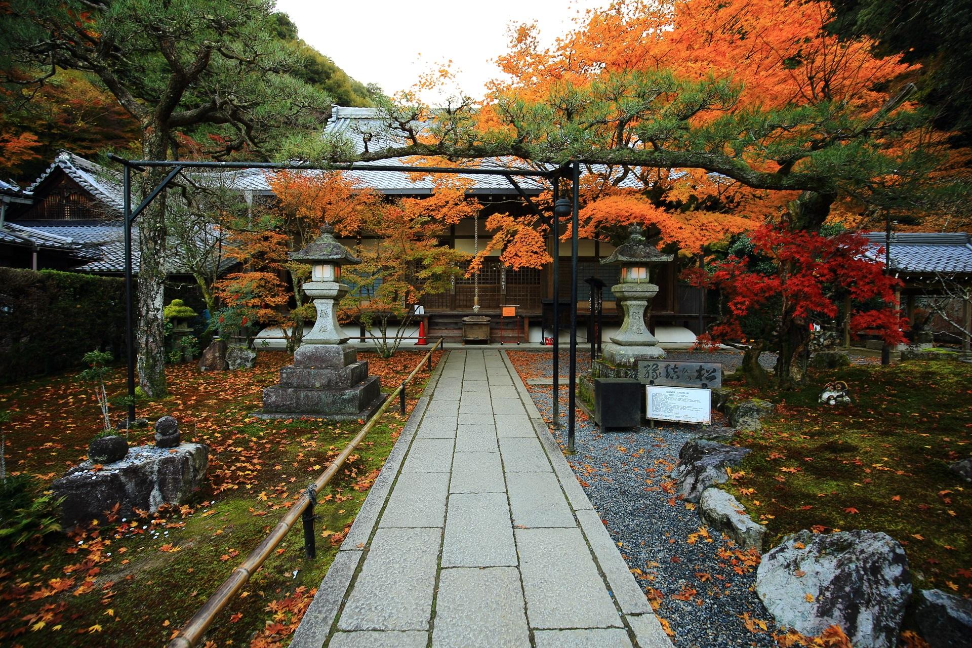 最勝院の本堂と縁結びの松と鮮やかな見ごろの紅葉