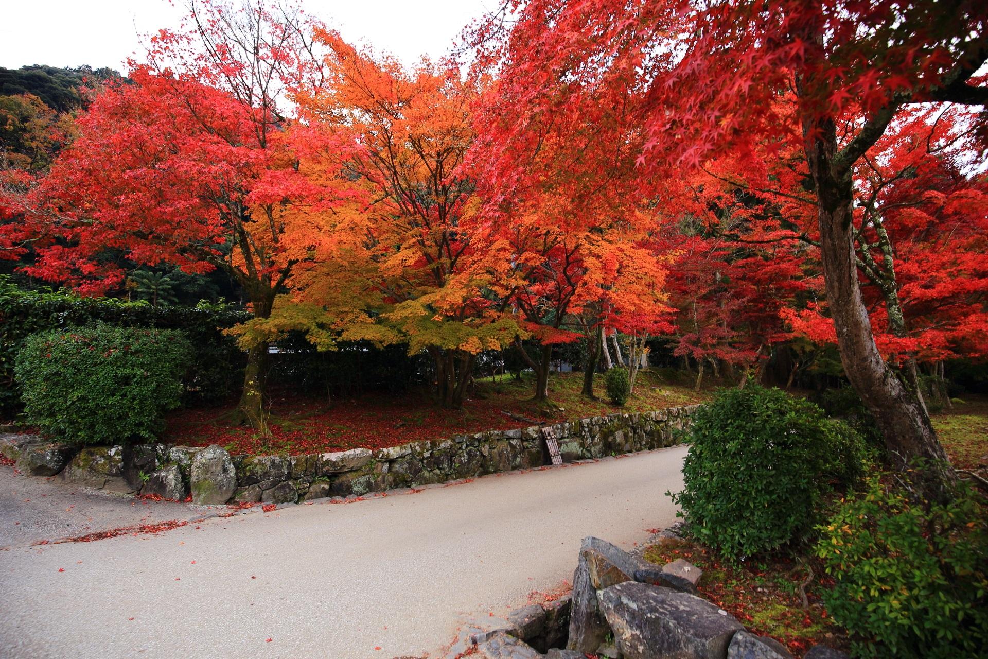 琴坂の色とりどりの溢れる豪快な紅葉
