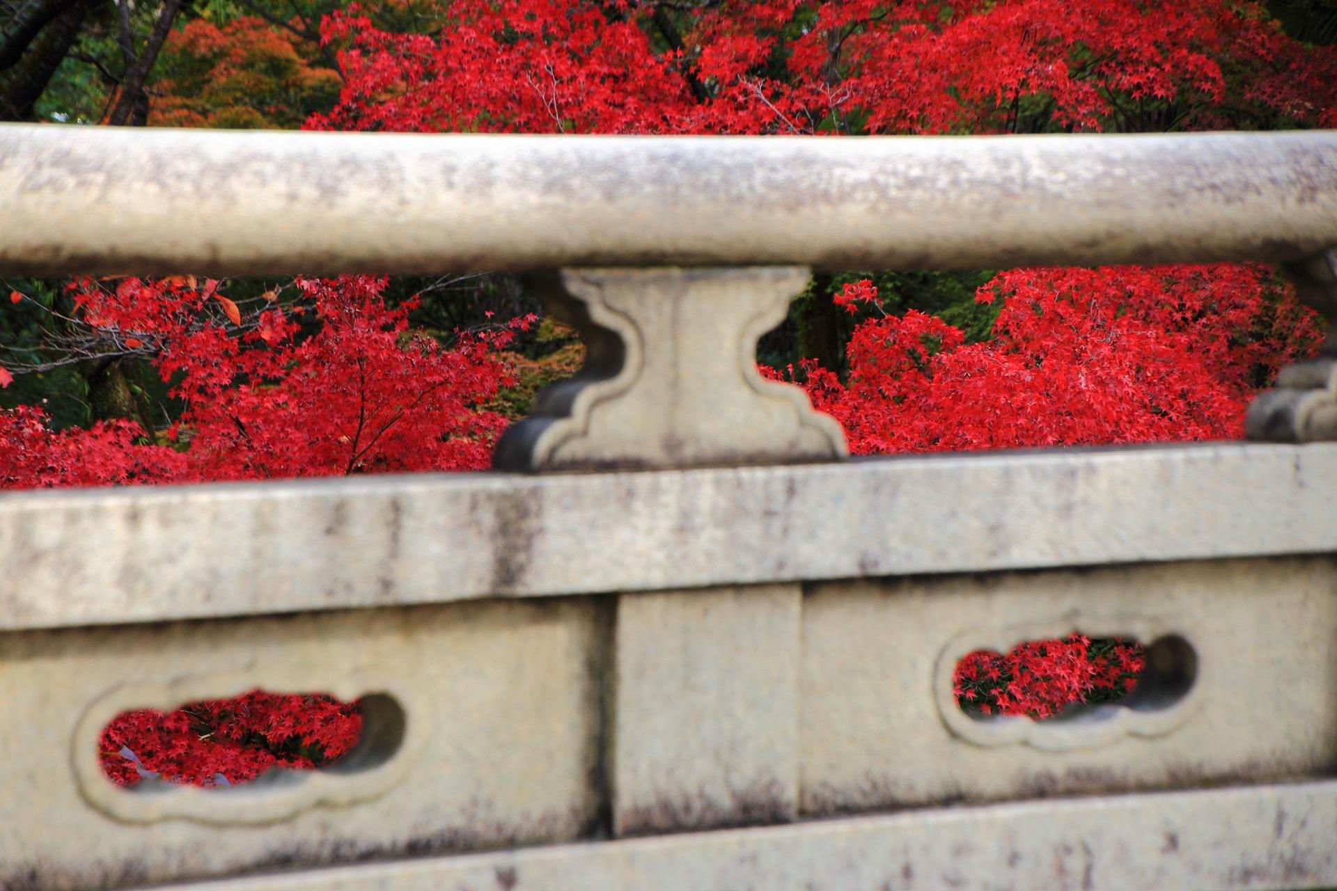 大谷本廟の円通橋の欄干から見える華やかな紅葉