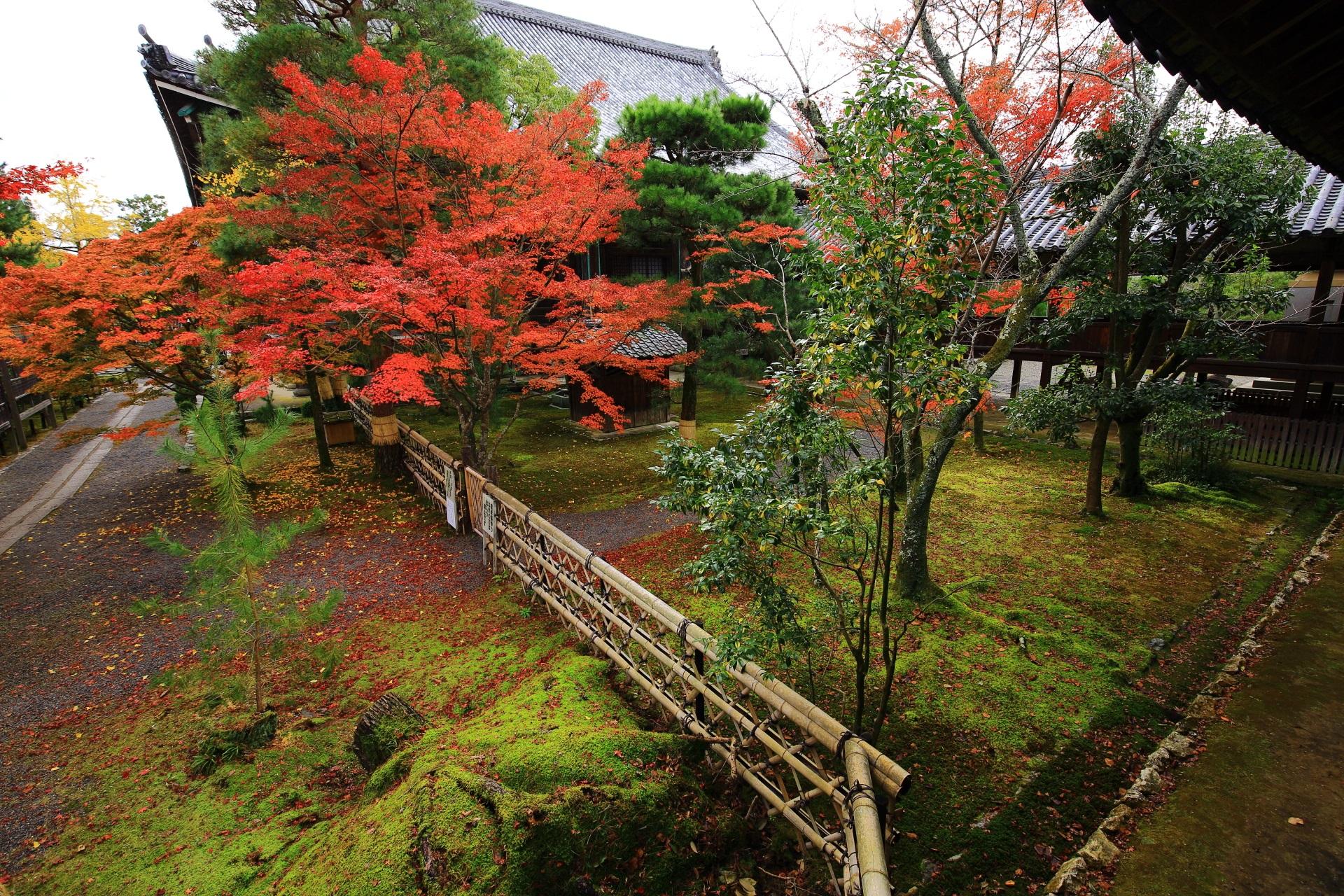 雄大な本堂を背景に色づく紅葉