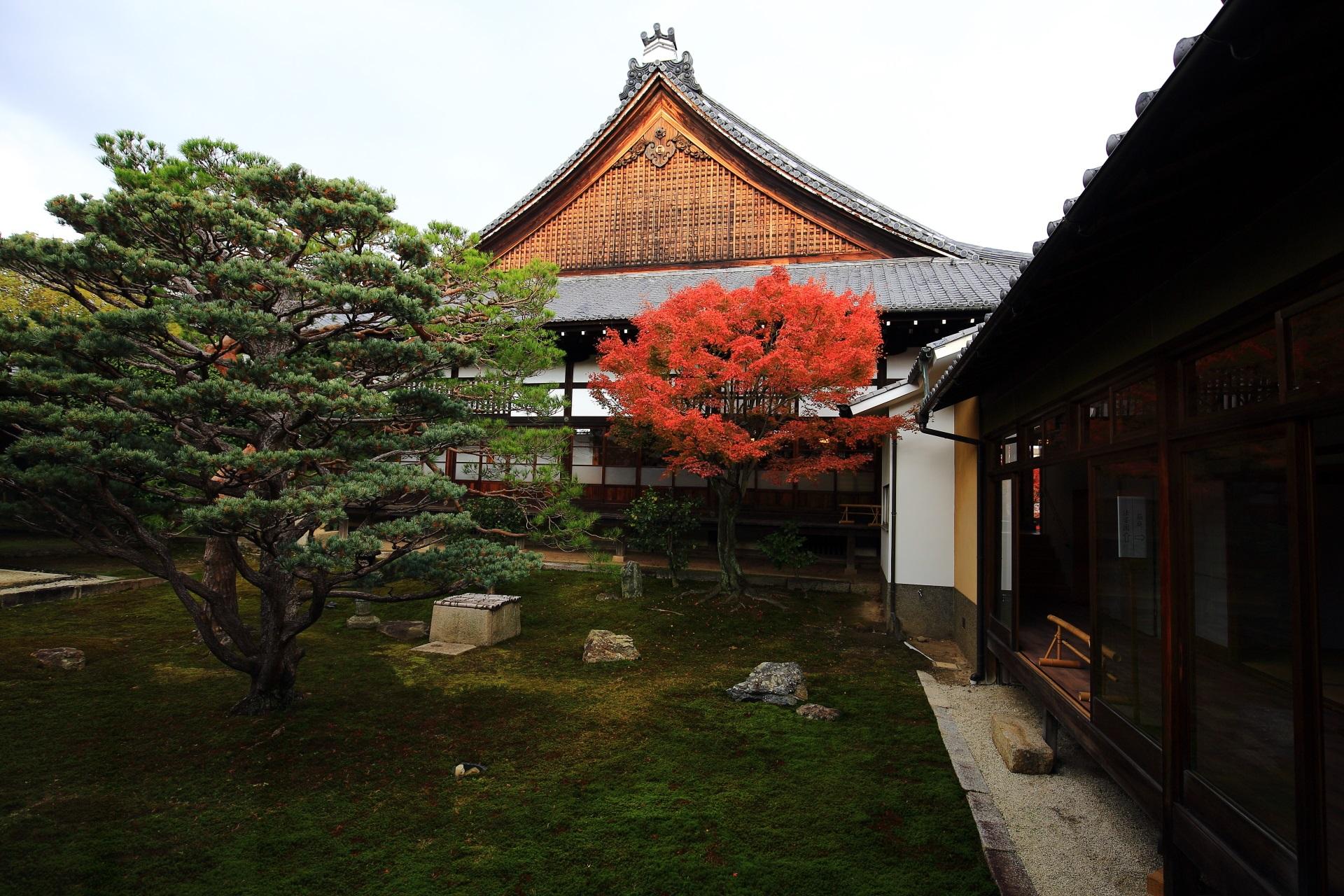 妙覚寺の本堂を彩る紅葉と樹齢100年を越すと言われる五葉の松