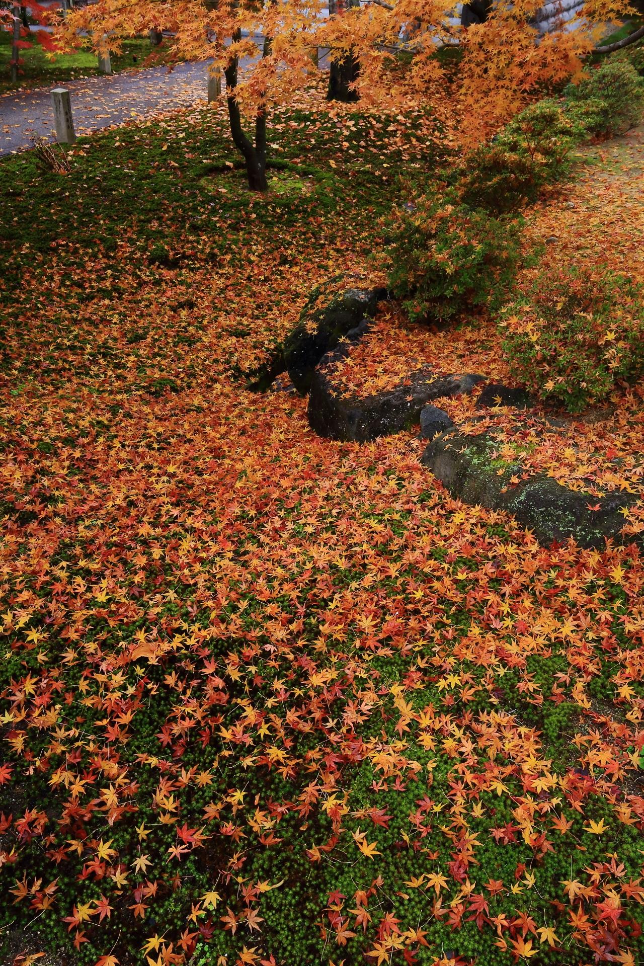 晩秋を彩る圧巻の散り紅葉の絨毯