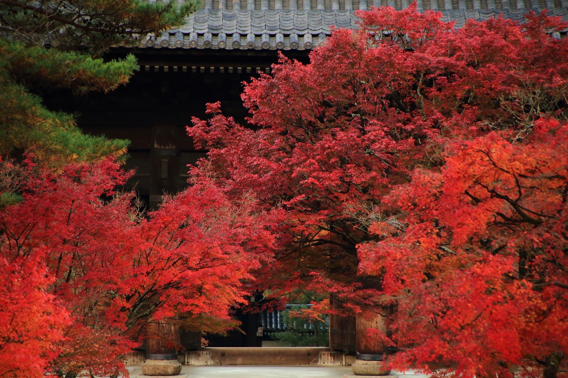 南禅寺の豪快に色づく三門前の紅葉