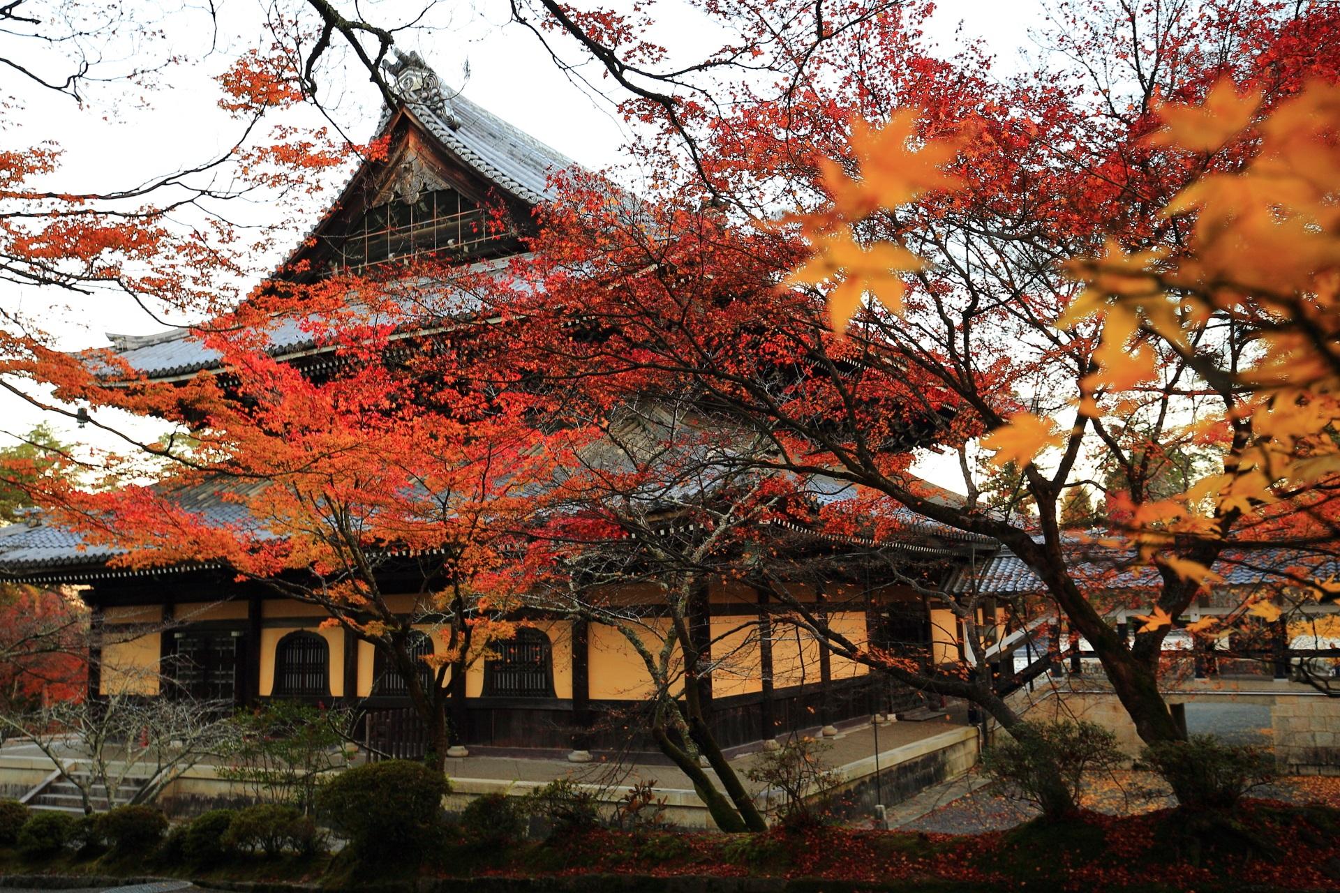 南禅寺の独特の色合いの法堂と鮮やかな紅葉