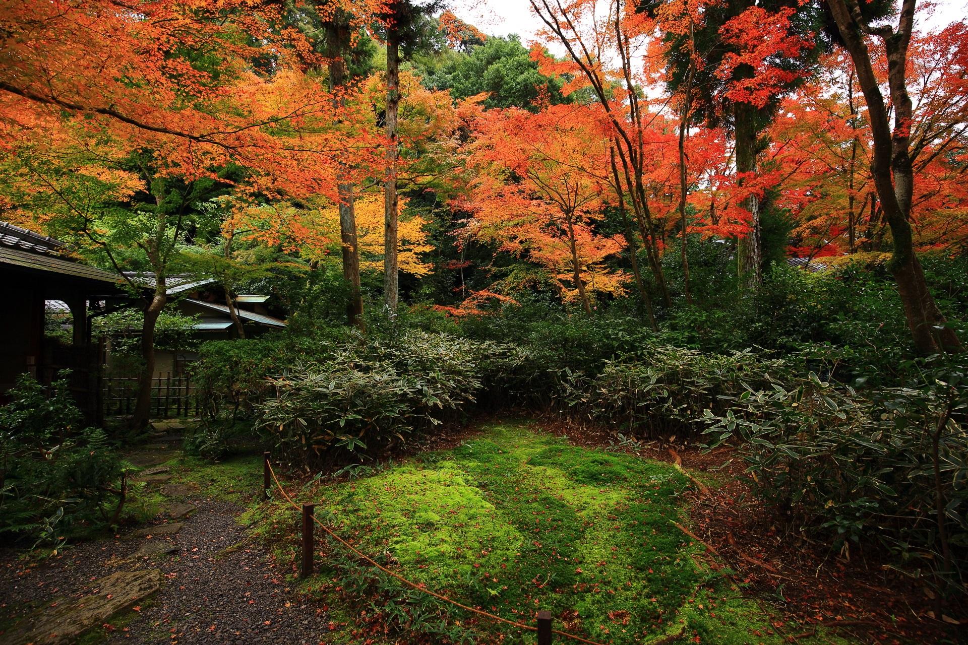 淡い緑の苔や深い緑の笹に映える含翠庭の色とりどりの鮮やかな紅葉