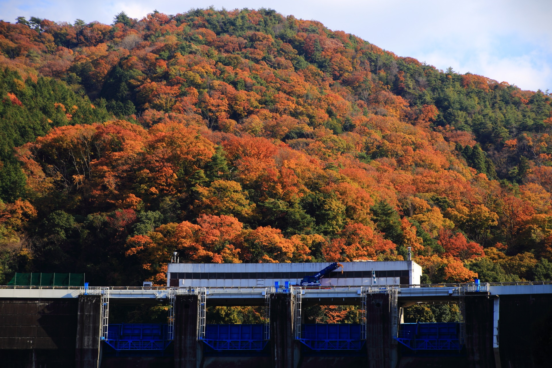 天ヶ瀬ダムの溢れる豪快な秋色