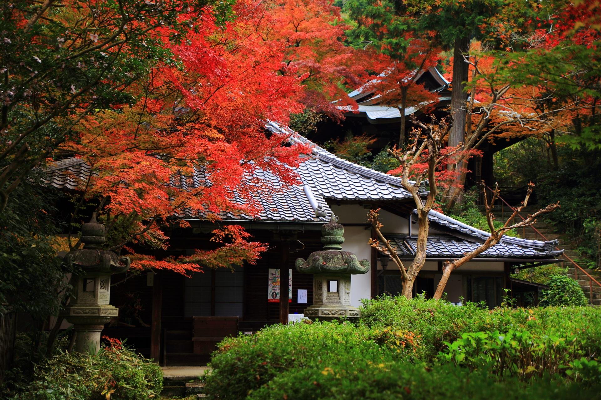 鮮やかな紅葉につつまれる来迎院の本堂と後ろの荒神堂